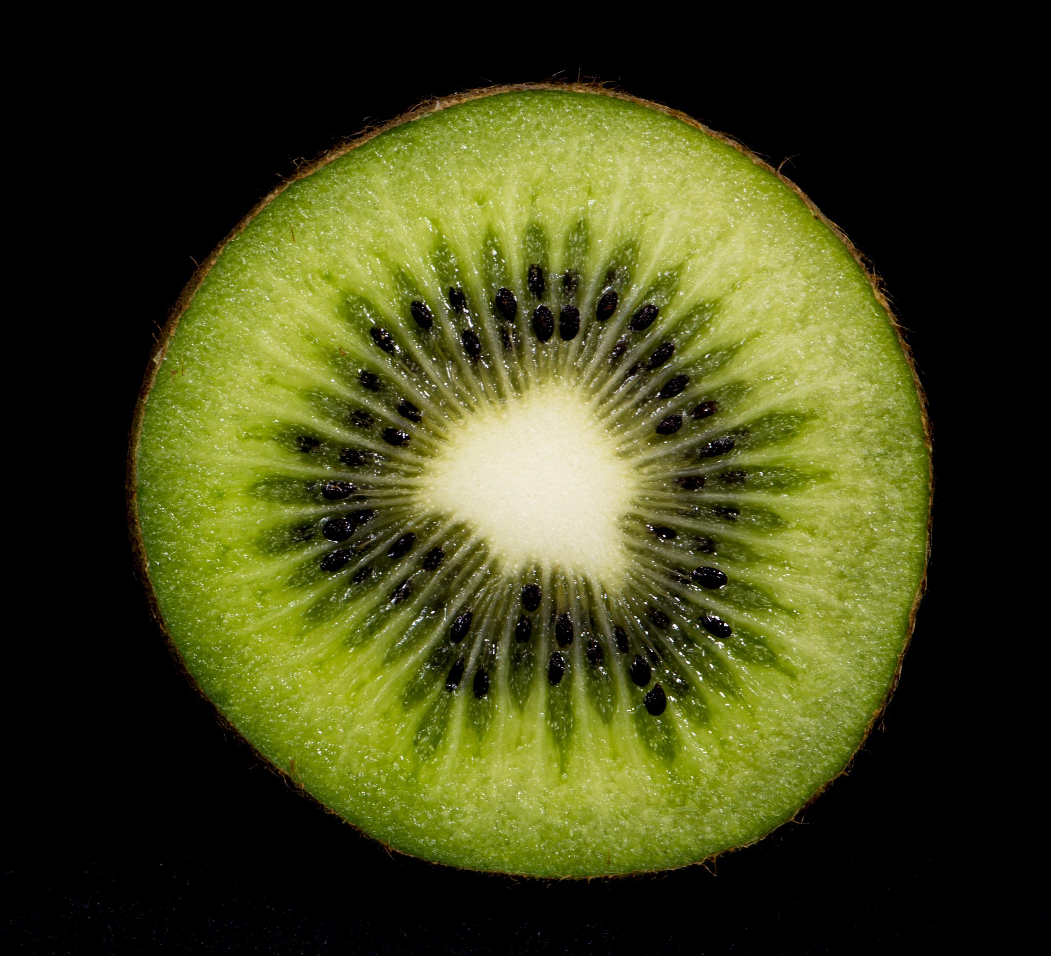 Kiwi-Makro by Albert H. Wegmann