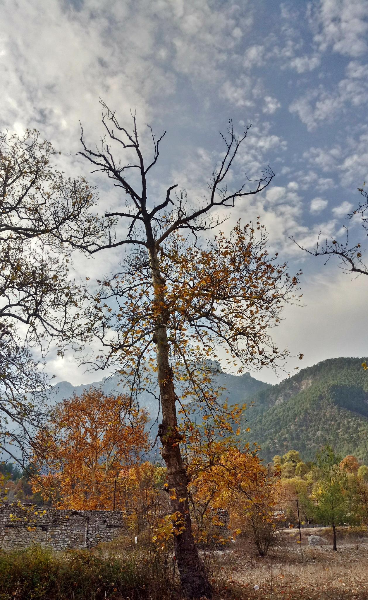 Tree by meryem.g.ozkaya