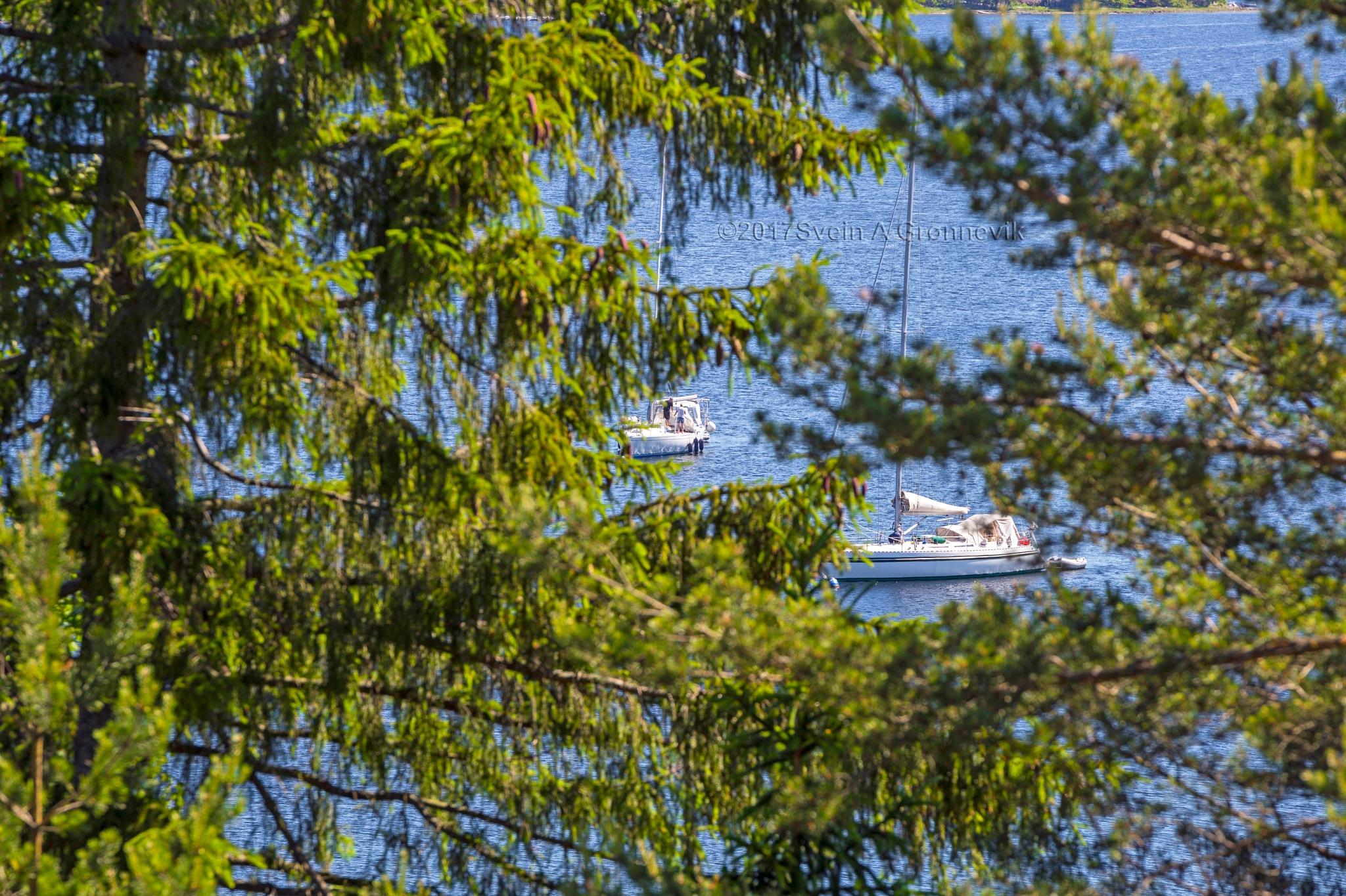 Saiboats In The Trees... by Svein Arne Grønnevik