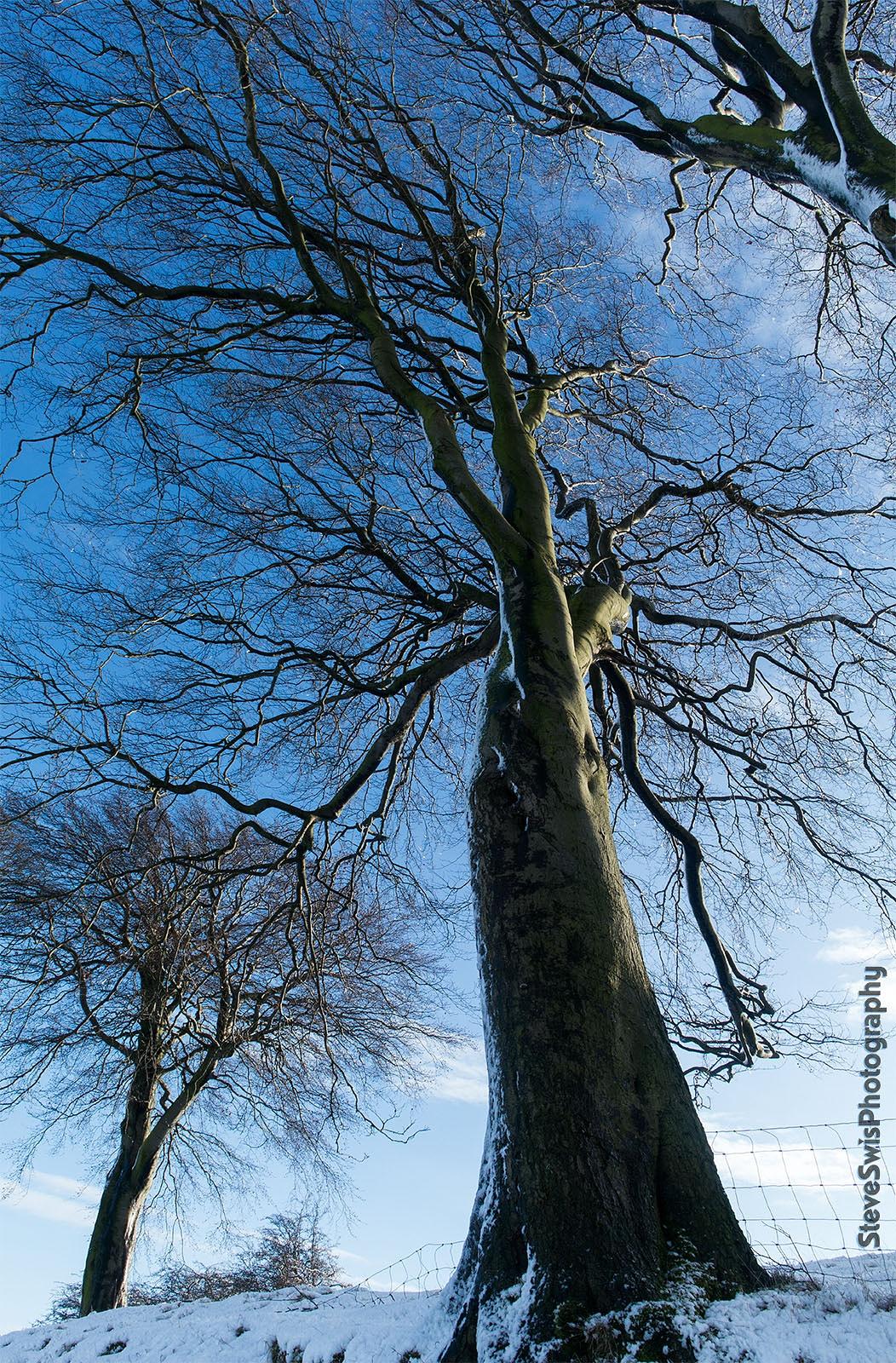 Photo in Landscape #snow #tree #winter #denholme