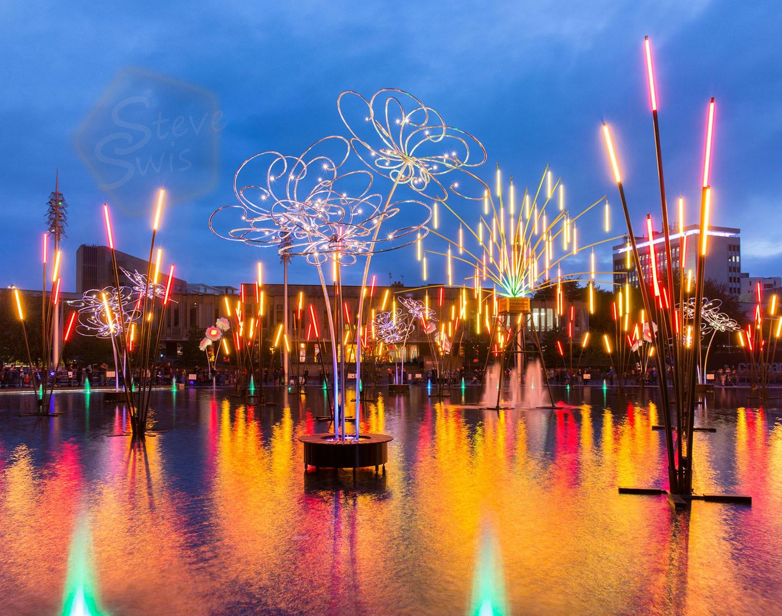 Forest of Light by Steve Swis