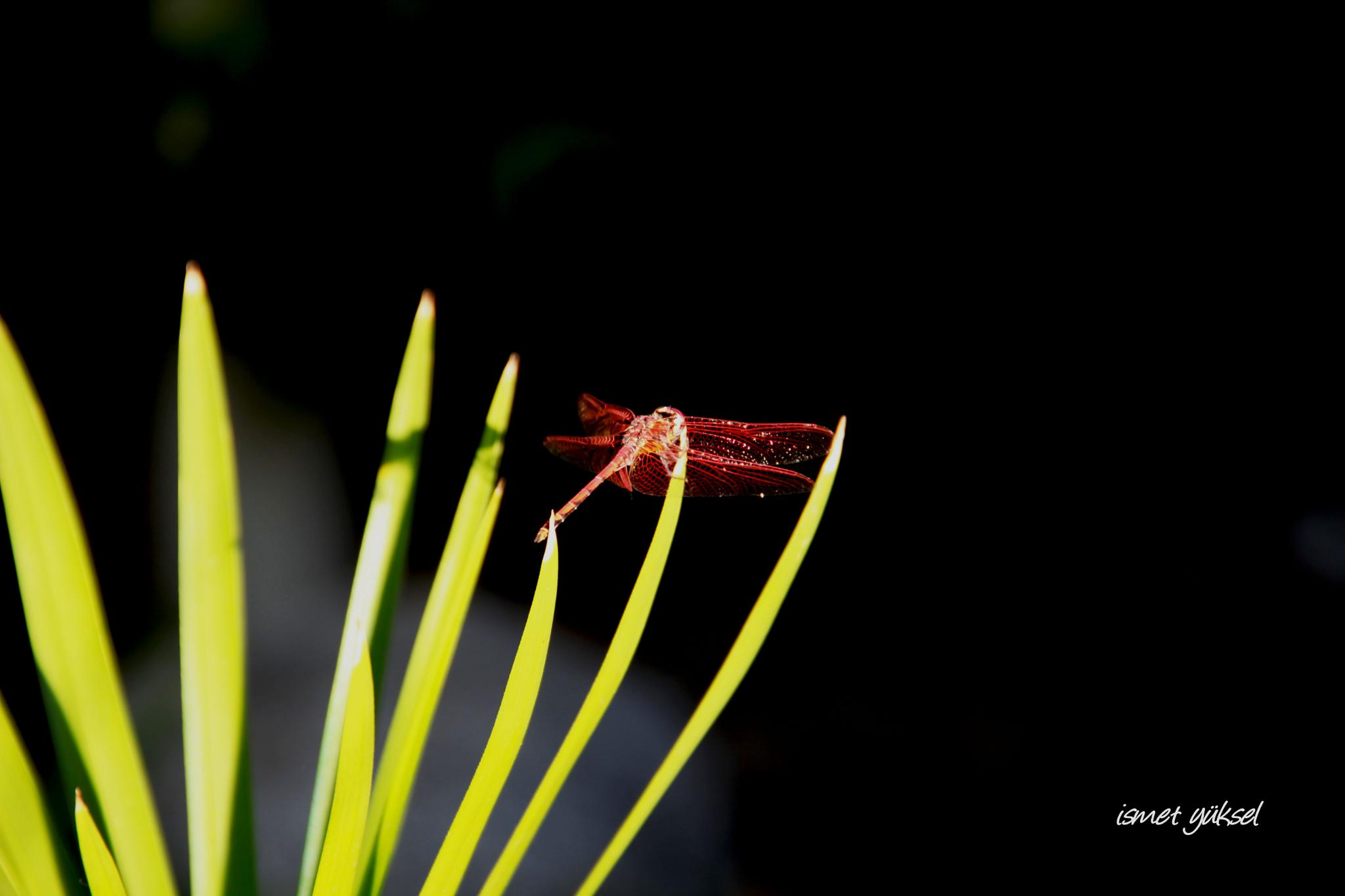 Photo in Macro #butterfly macro nature