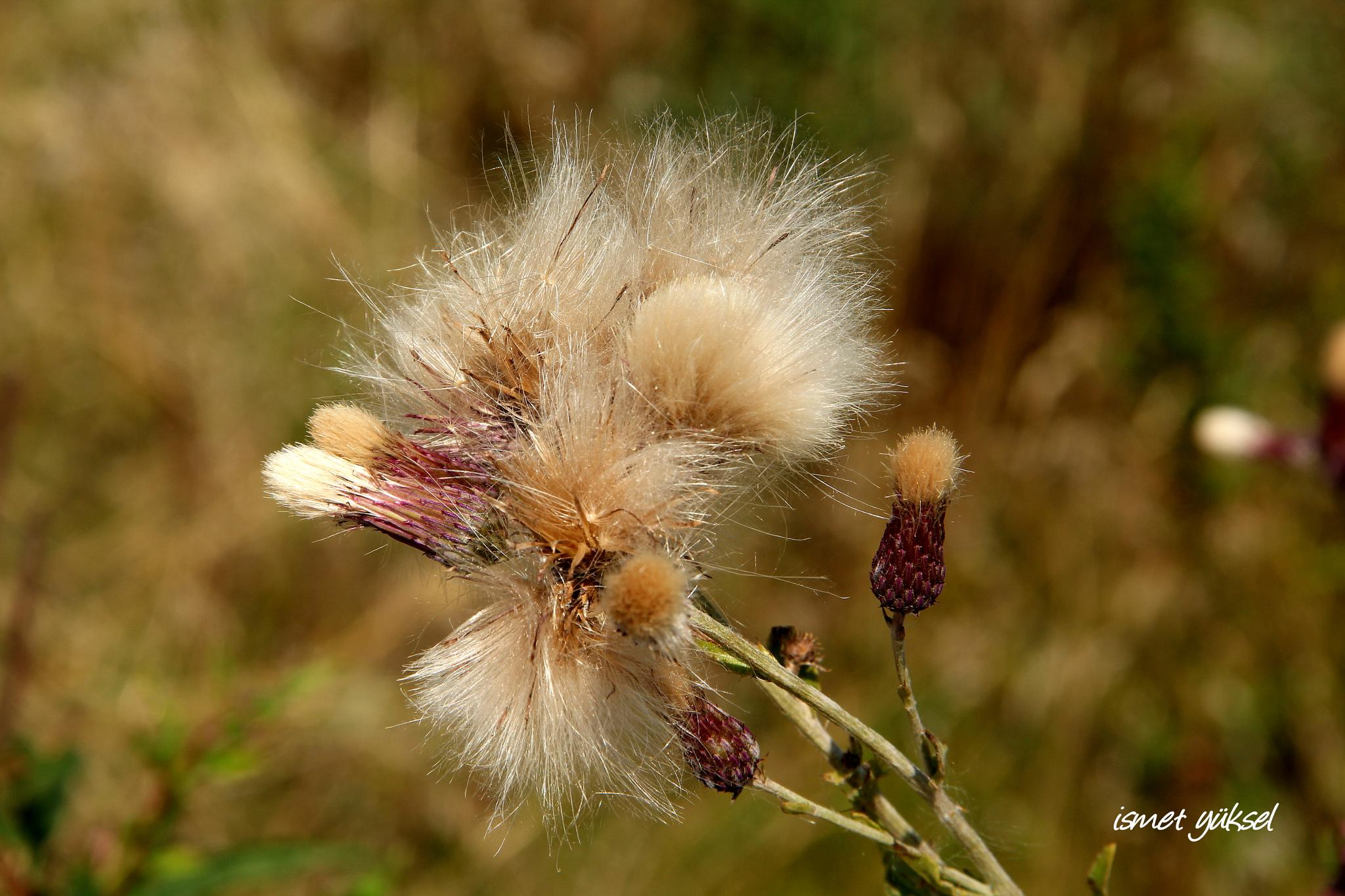 FLOWER by İsmet Yüksel