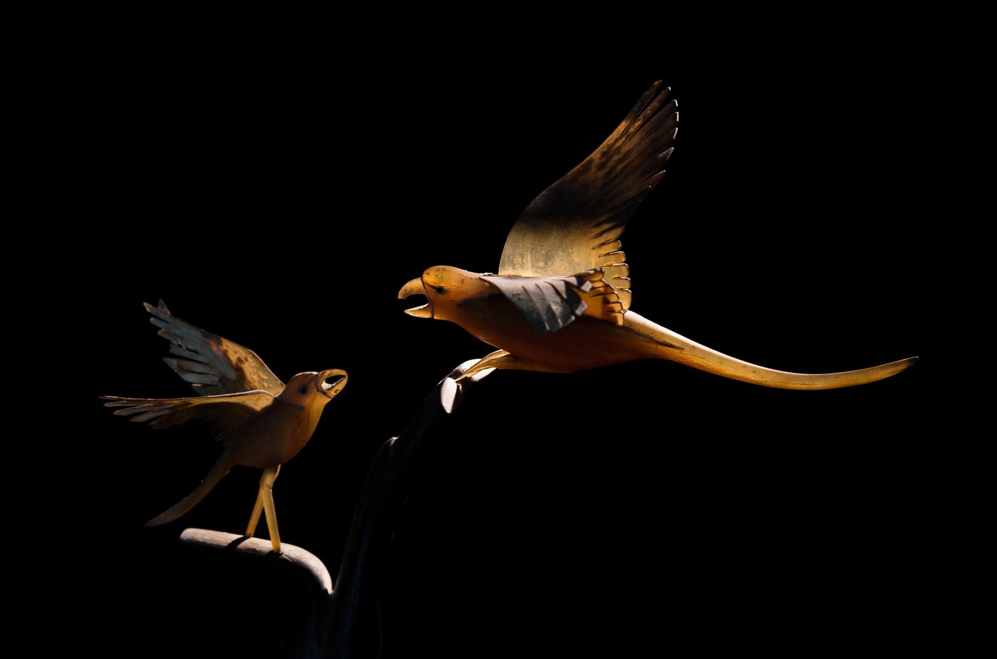 two bird by albertsiraj