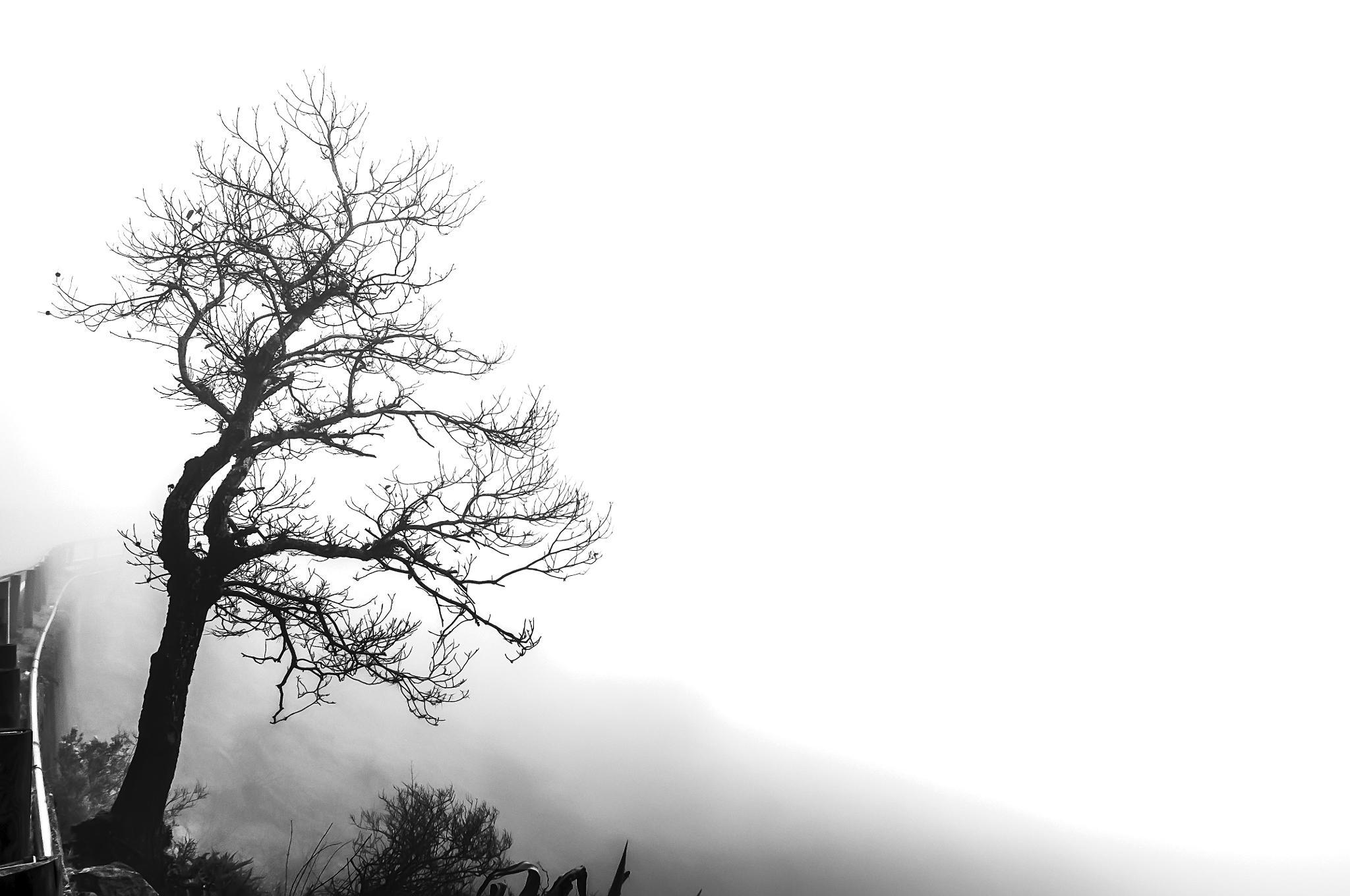 TREE by Parsifal Garcia