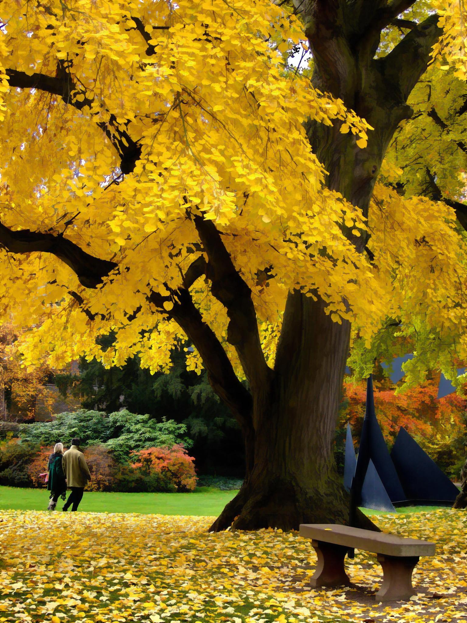 A Walk through the Park by Raymond Thill