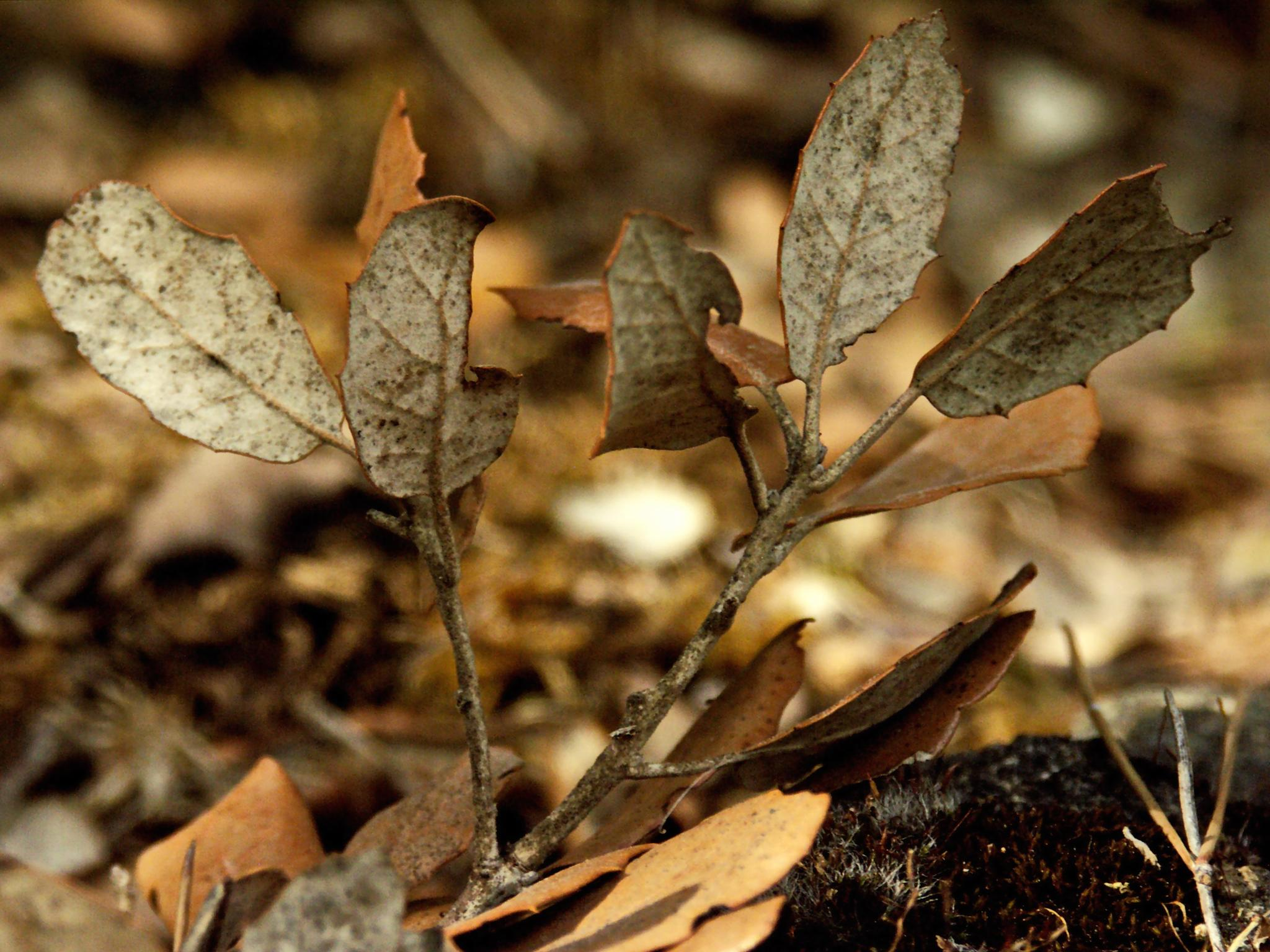 Leaves by Raymond Thill