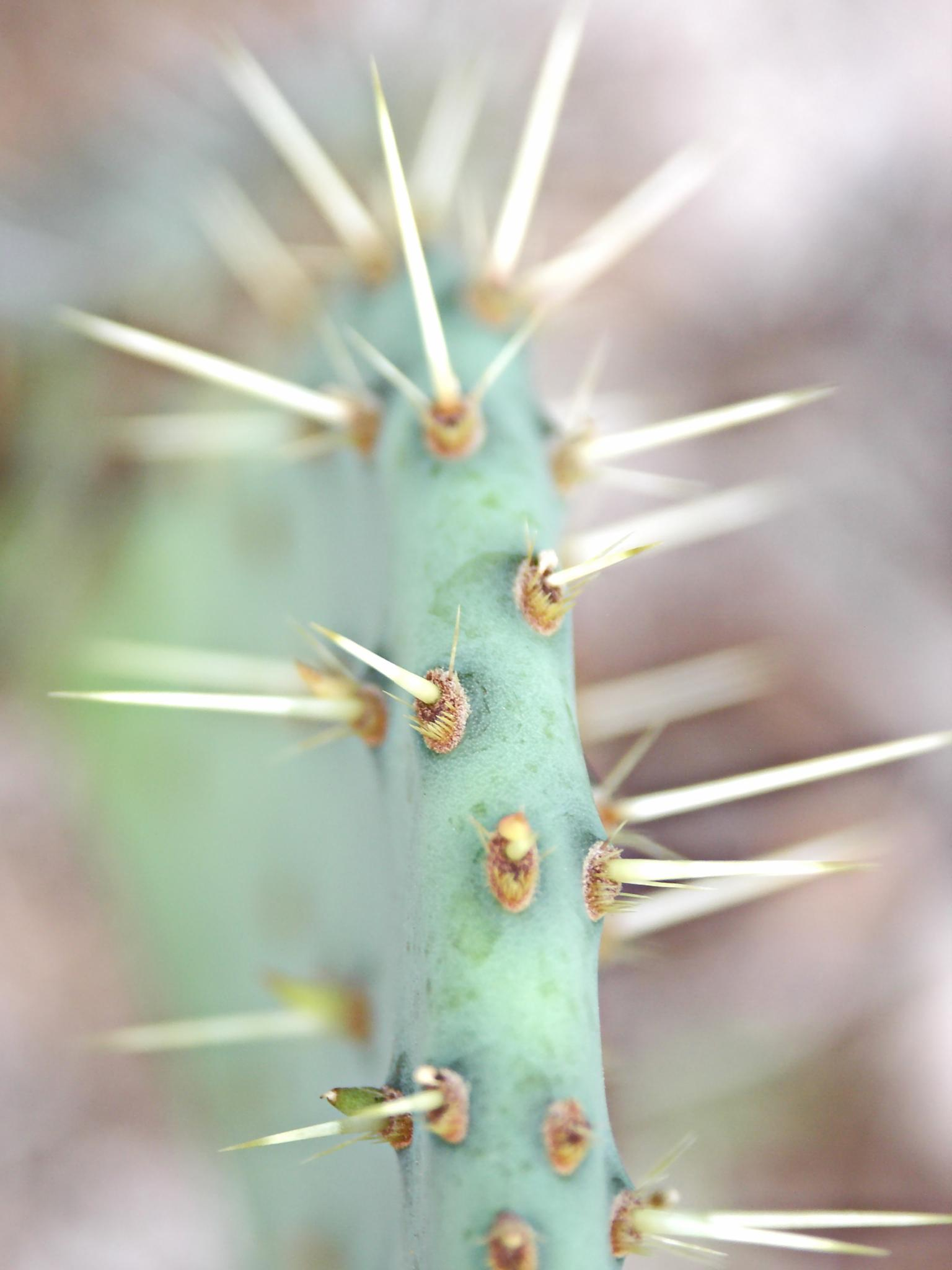Cactus by Raymond Thill