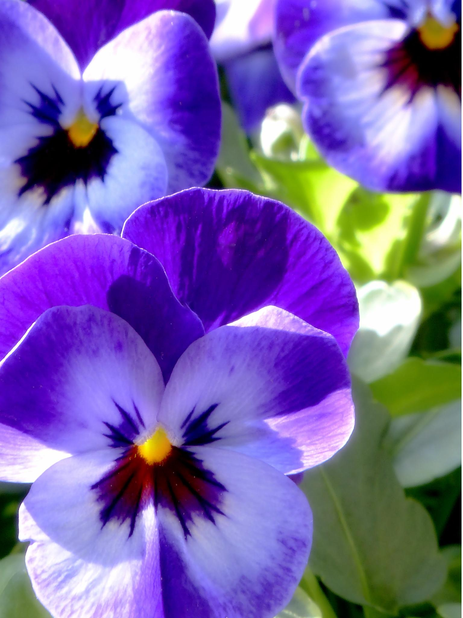 Spring Flowers 20 by Raymond Thill