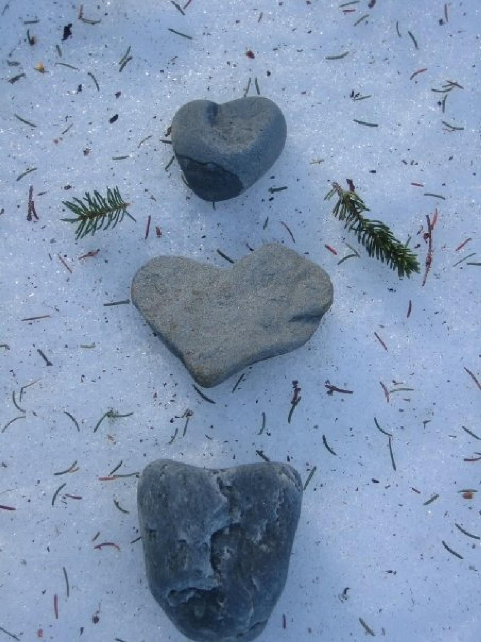 Rocks on Snow by Felicity Adams