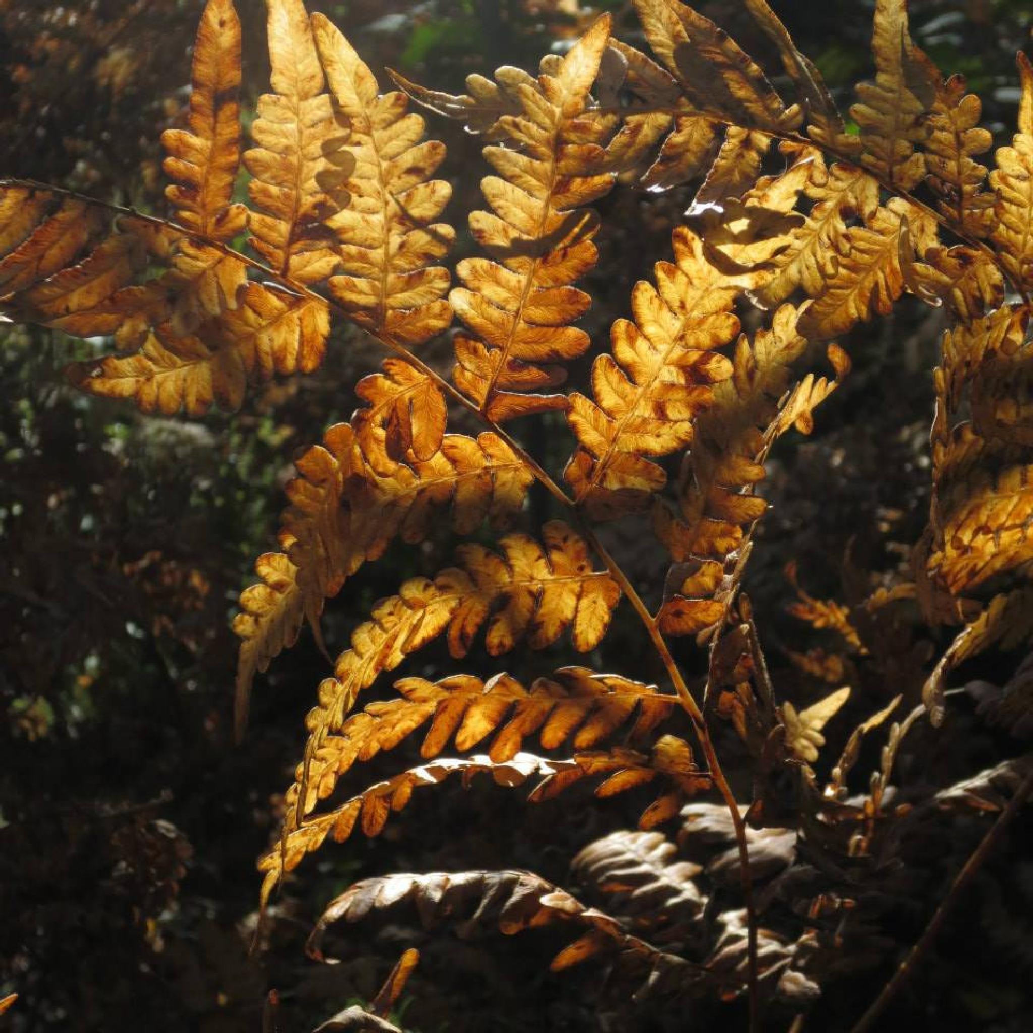 Ferns by Felicity Adams