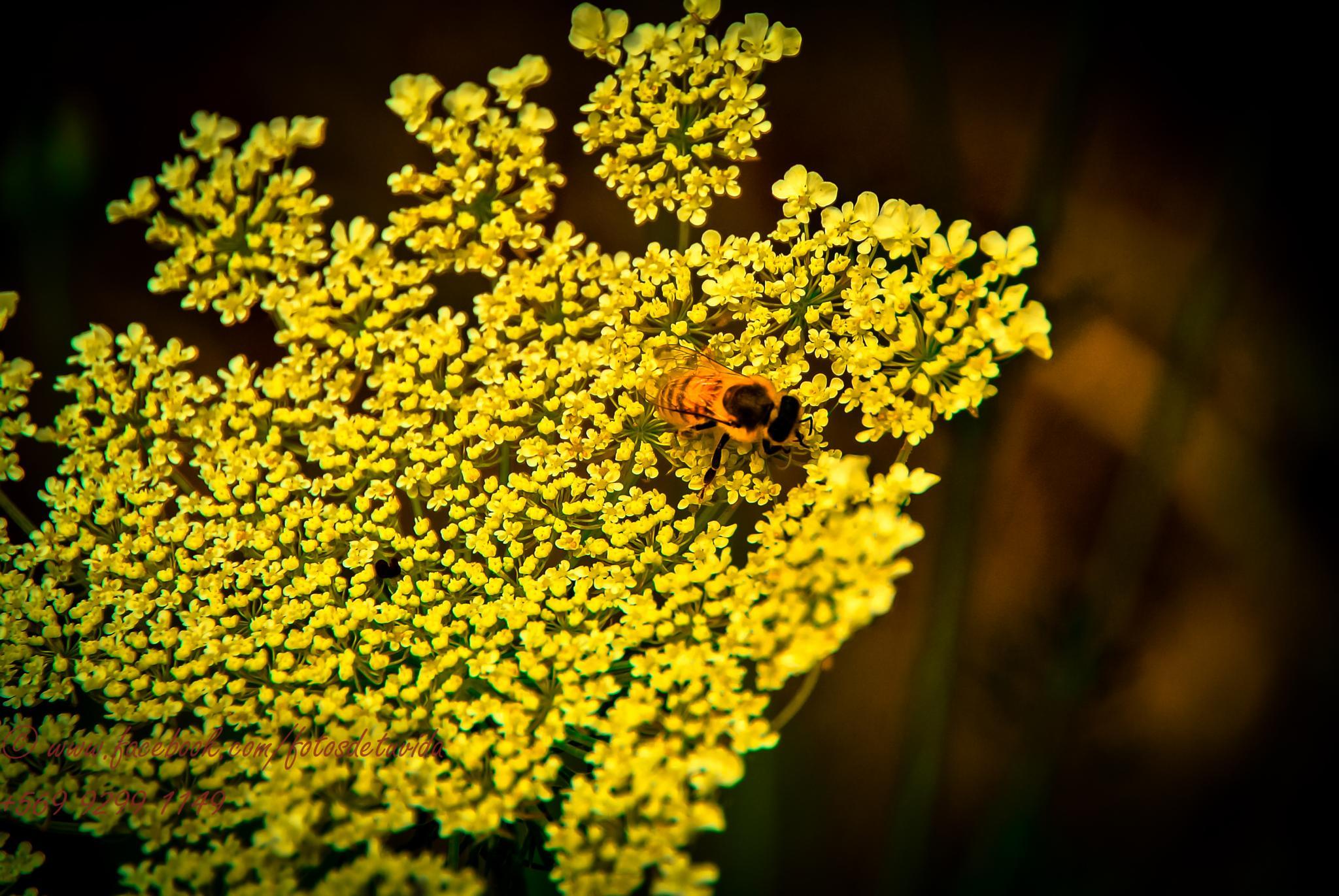 Simply Bee.  by RicardoEgana