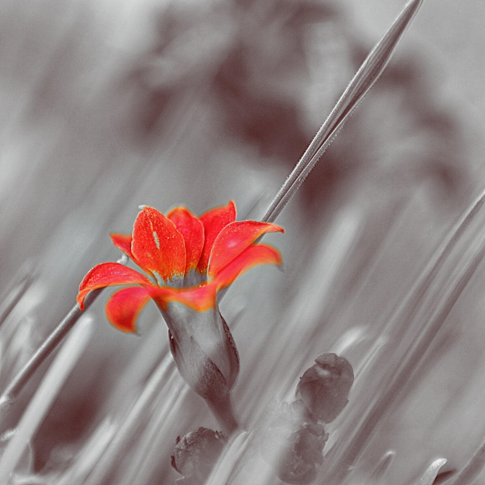 Untitled by a.shahmiri