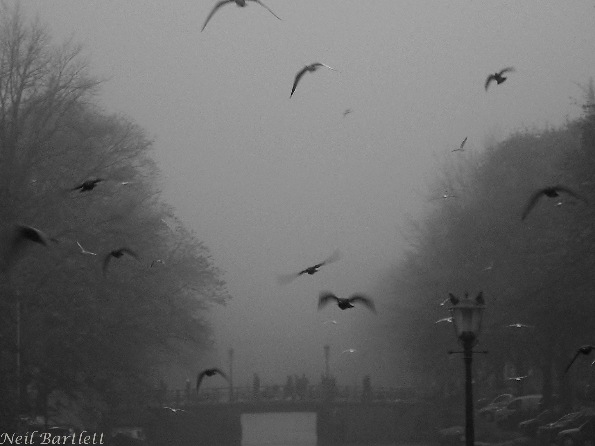 Amsterdam Mist !! by Neil Bartlett