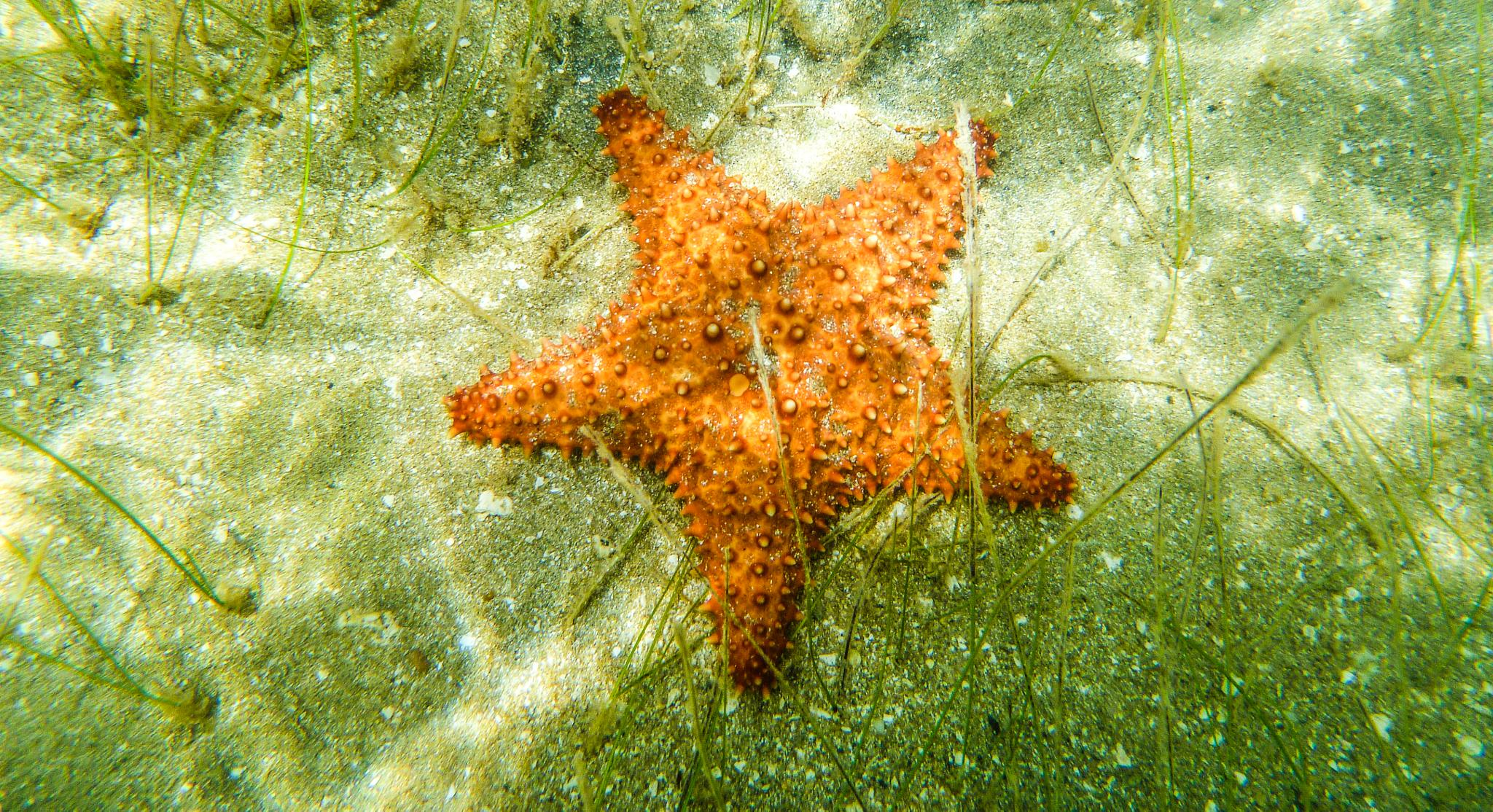 Starfish by Cait Templeton