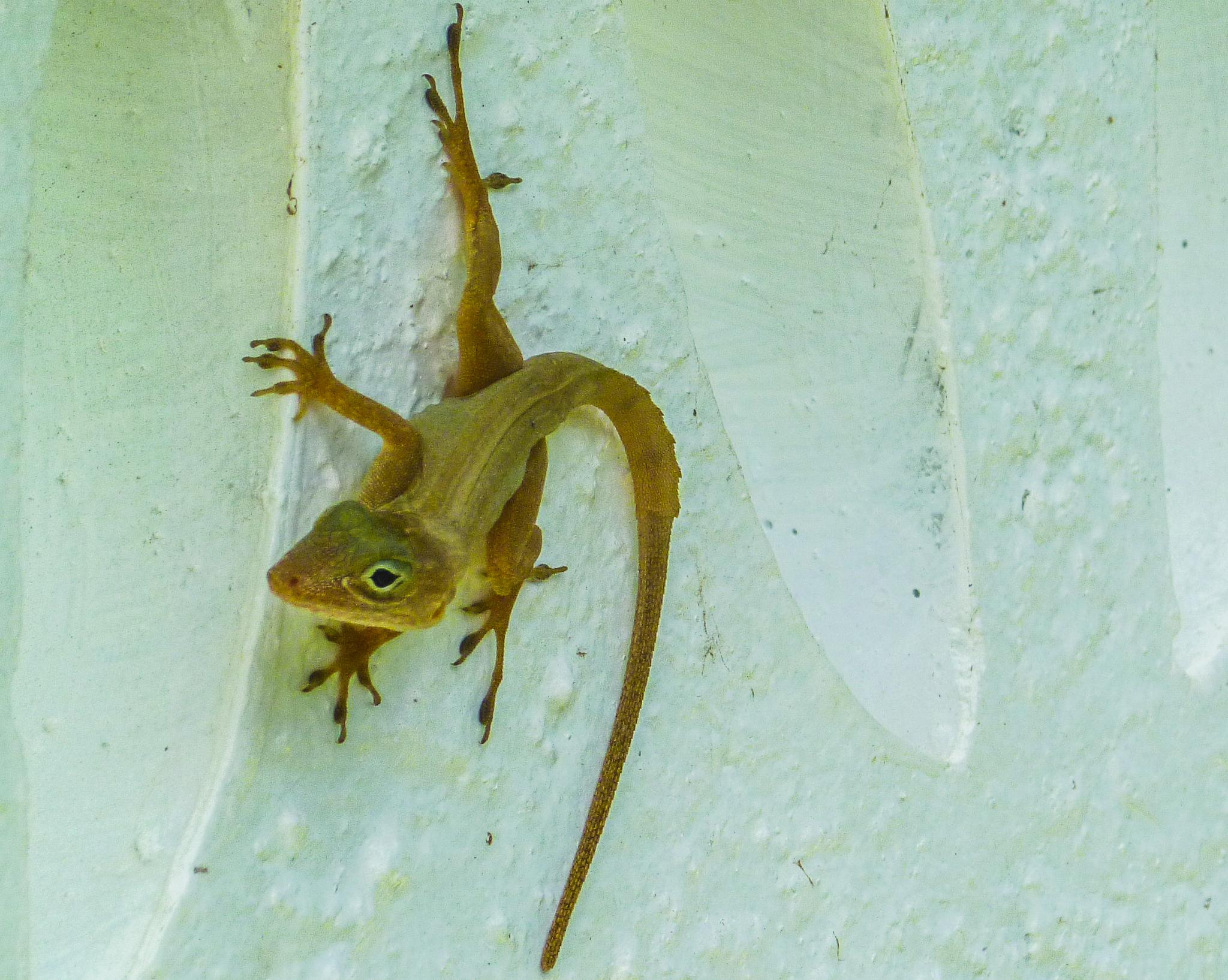 Mr. Lizard by Cait Templeton