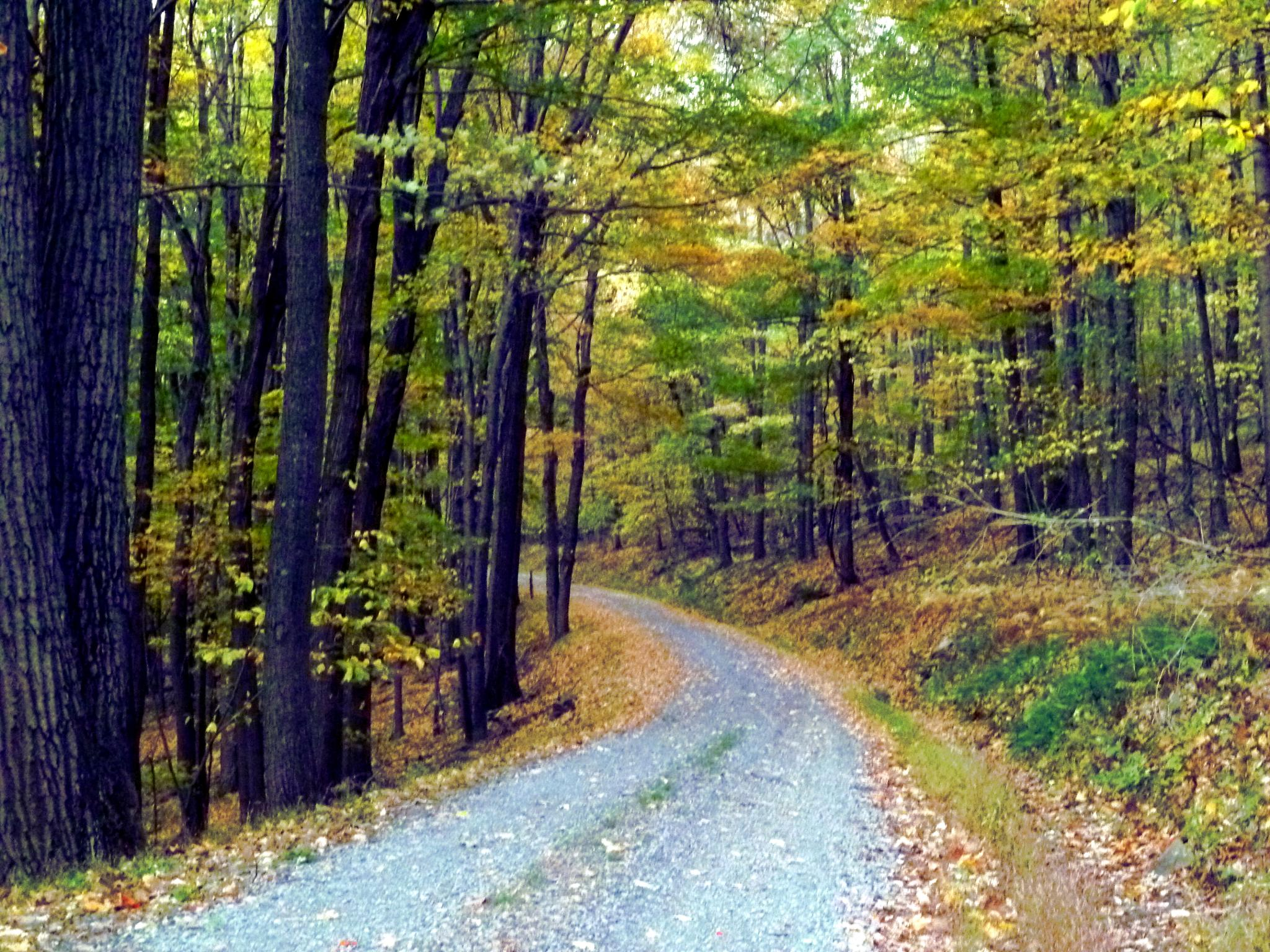 Photo in Landscape #fall #explore #trees #mountain #dirtroad
