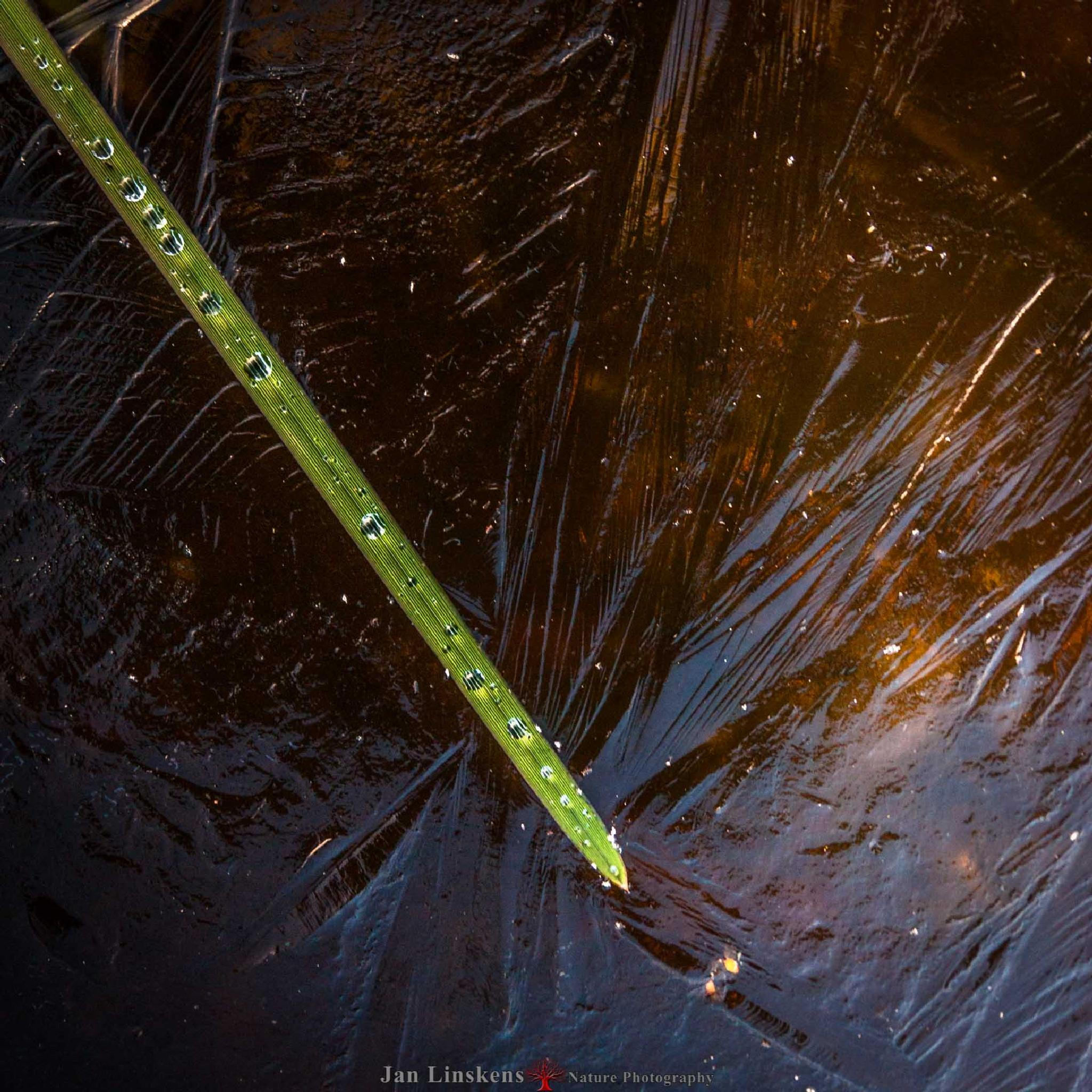 Frozen drops by jan.linskens.18