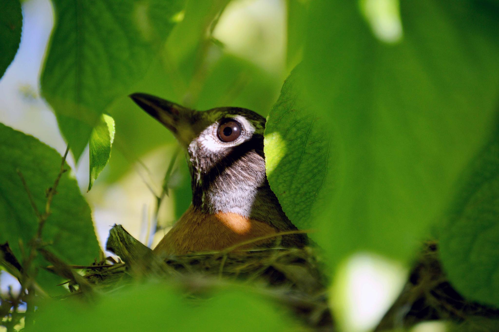 Photo in Nature #common robin