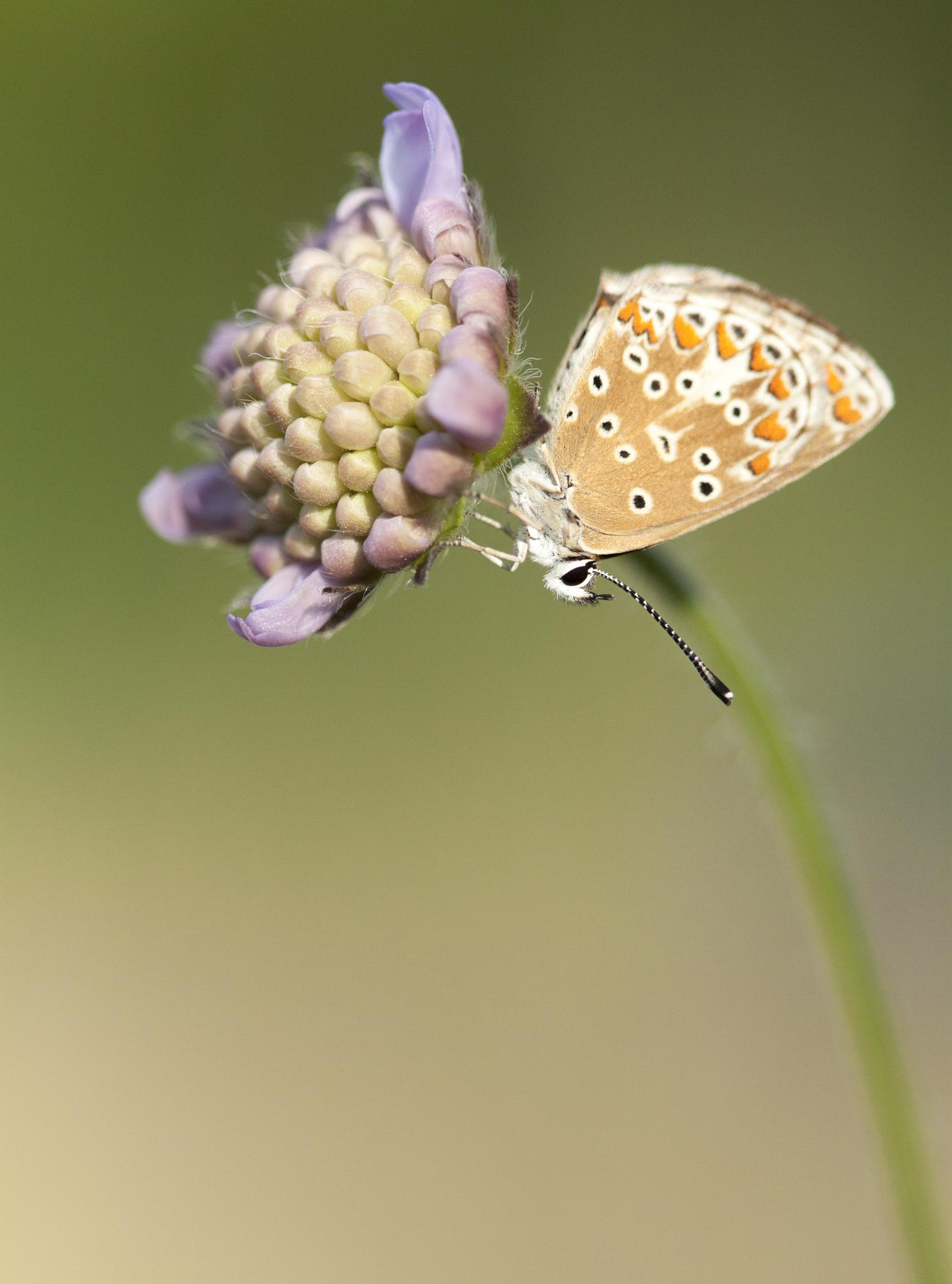 Photo in Macro #macro #butterfly #flower #nature #insect #canon