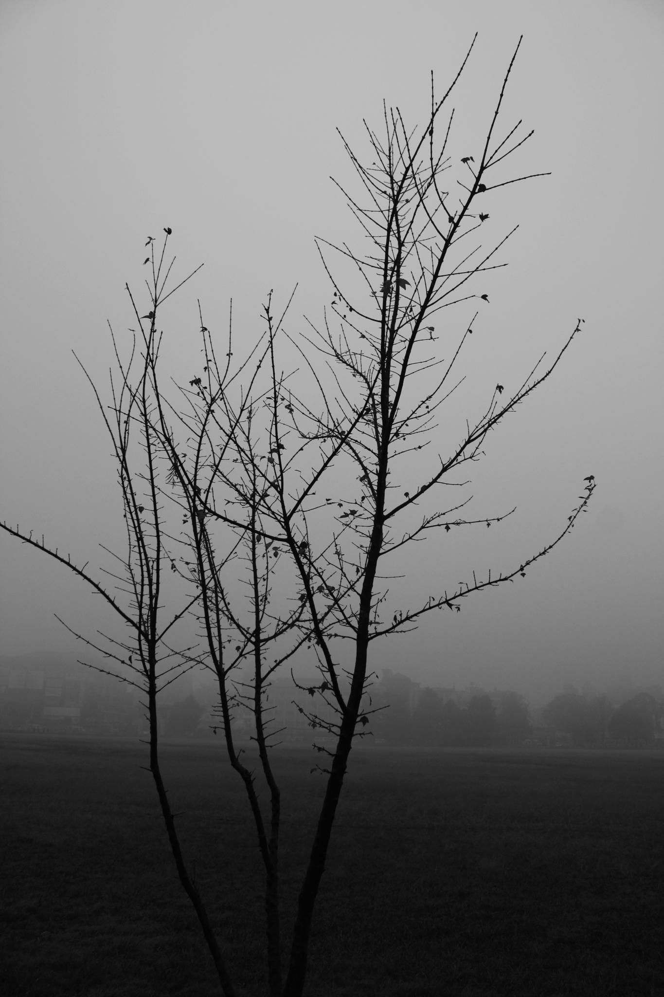 Photo in Black and White #tree #brances #winter #bw #blackandwhite #tundikhel #fog #mist