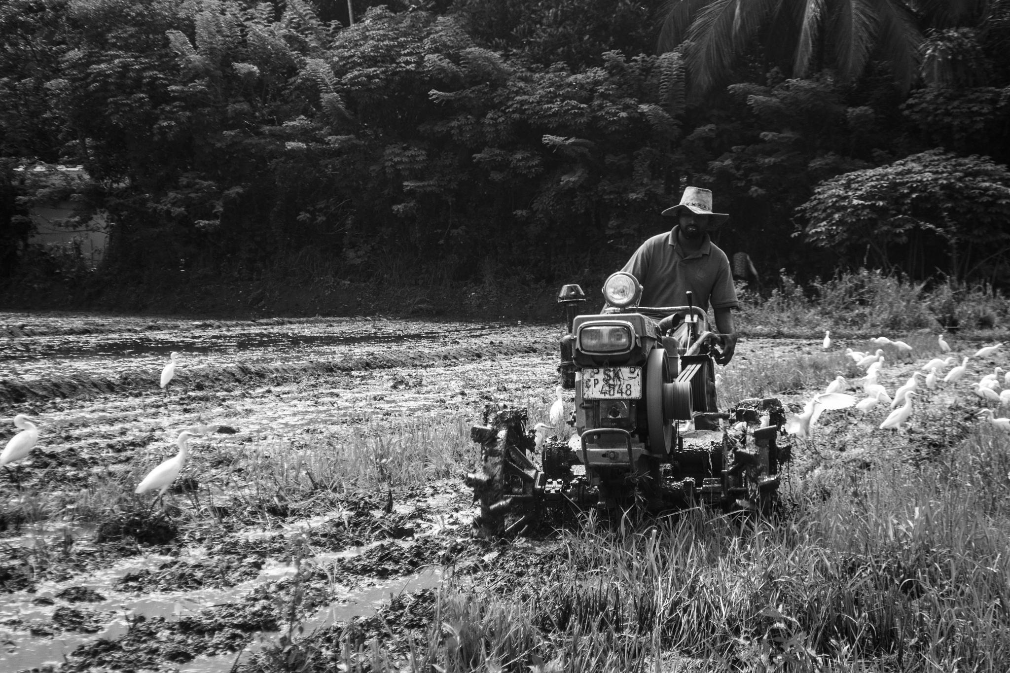 Farmer by gamika.premarathne
