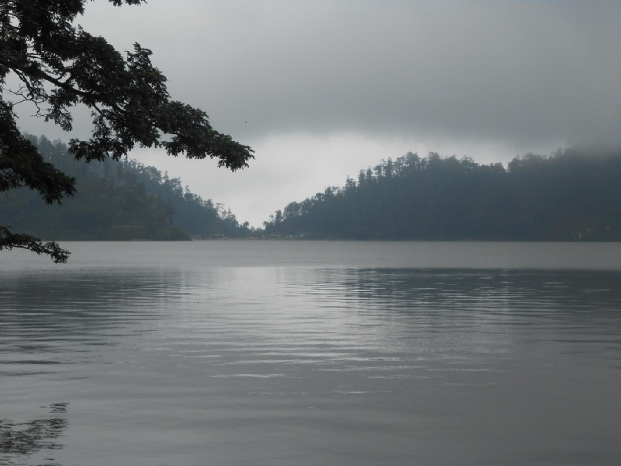 one misty morning on Ngebel Lake by urifah.ridlo