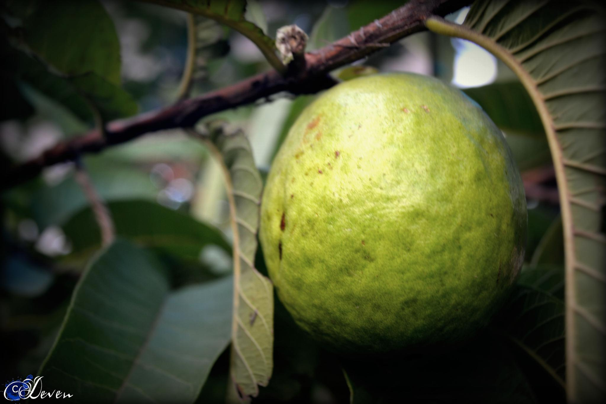 ~Guava~ by Deven's Photography