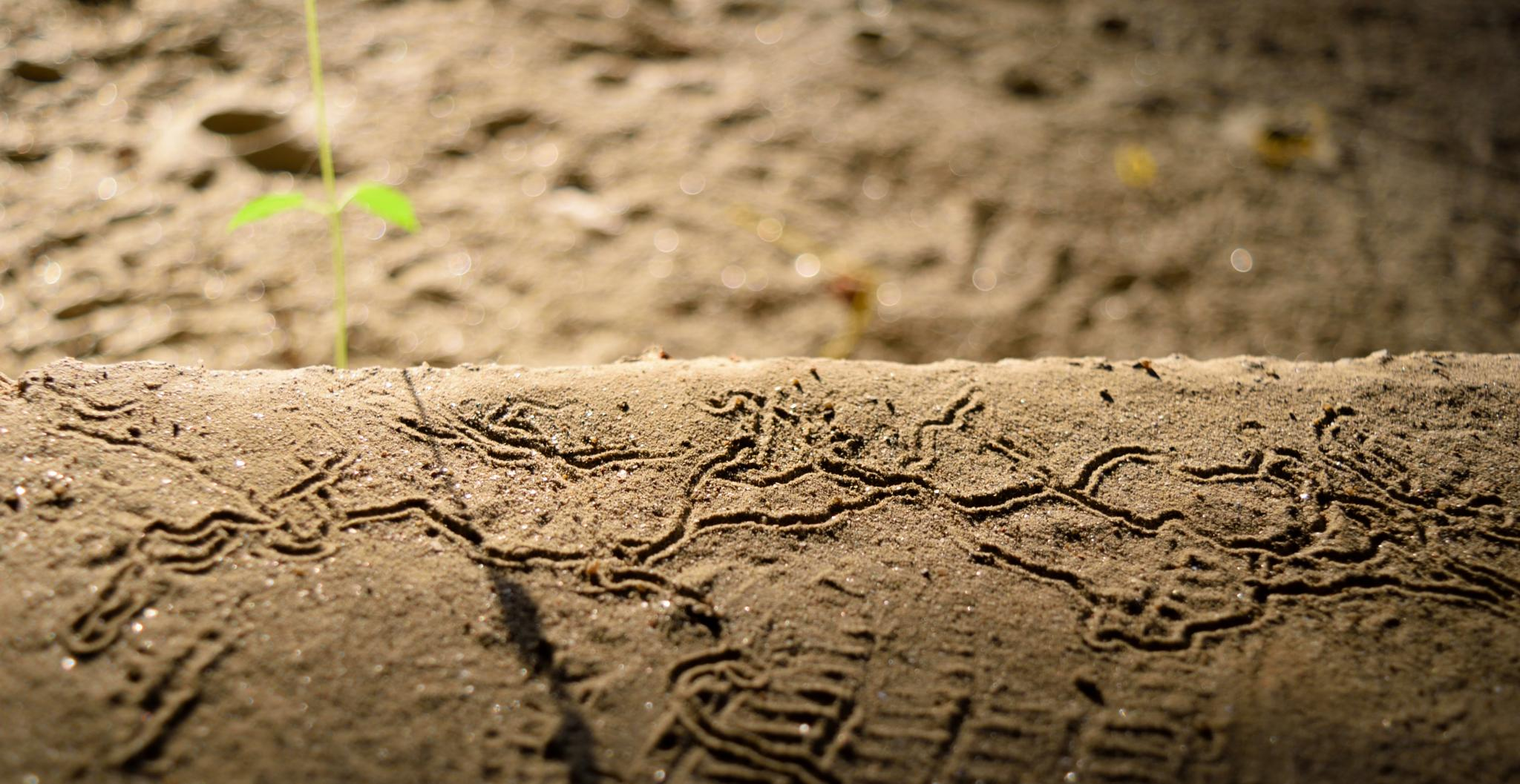 Photo in Abstract #abstract #sand #footsteps #past #nikon #green #earth