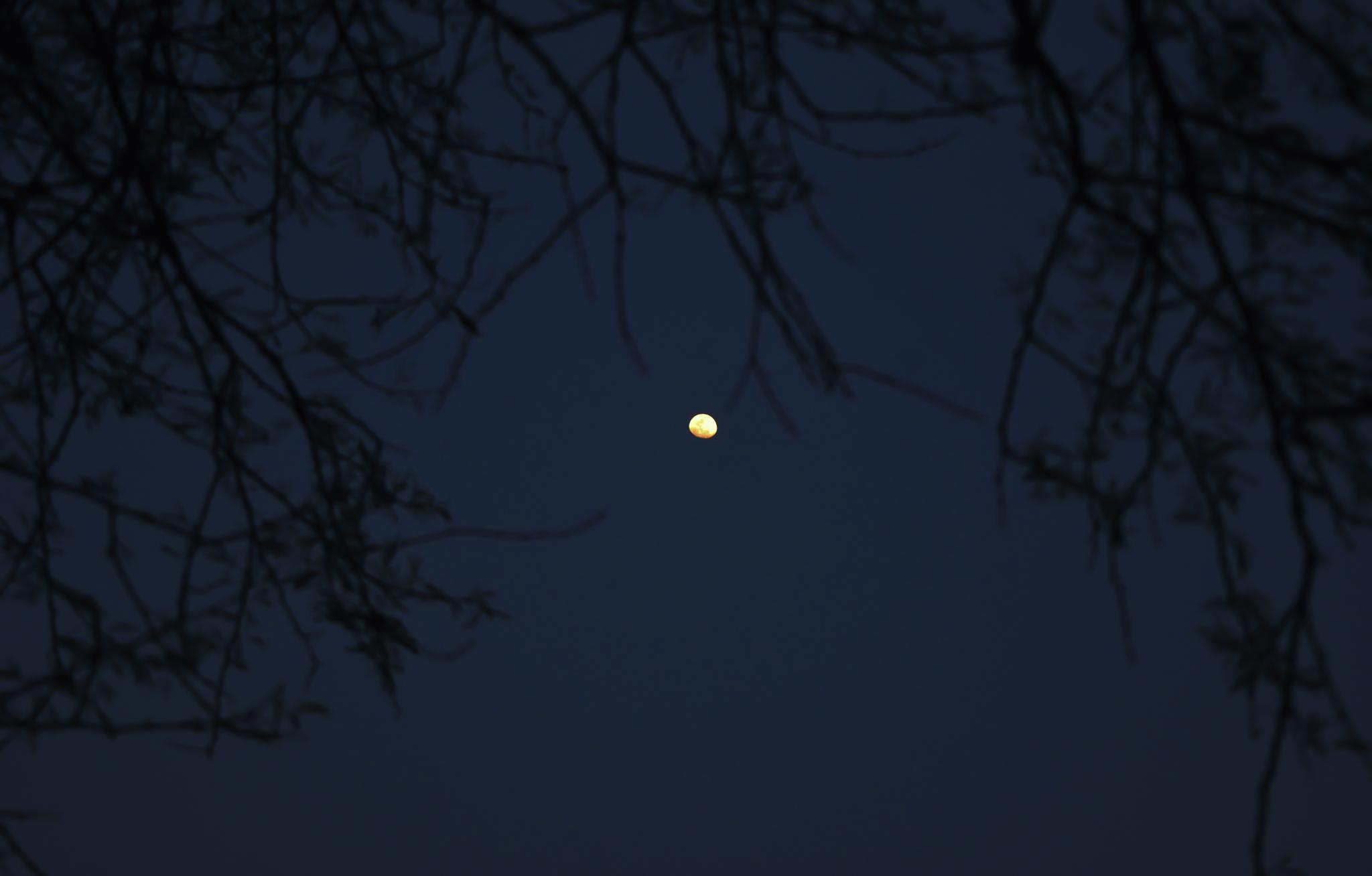 Moon by Joydip Ghosh