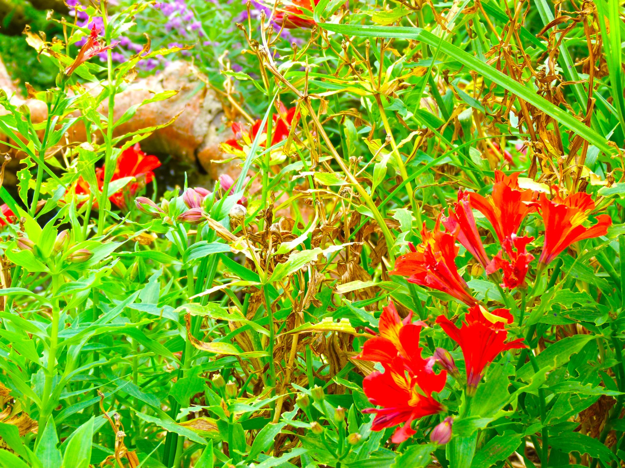 Photo in Nature #nature #flowers #free #explore #red #purple