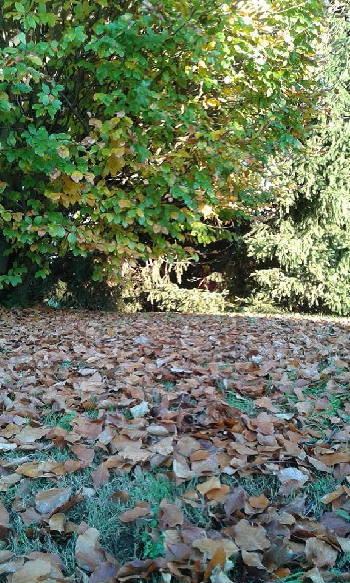 autumn by olori.fiorella