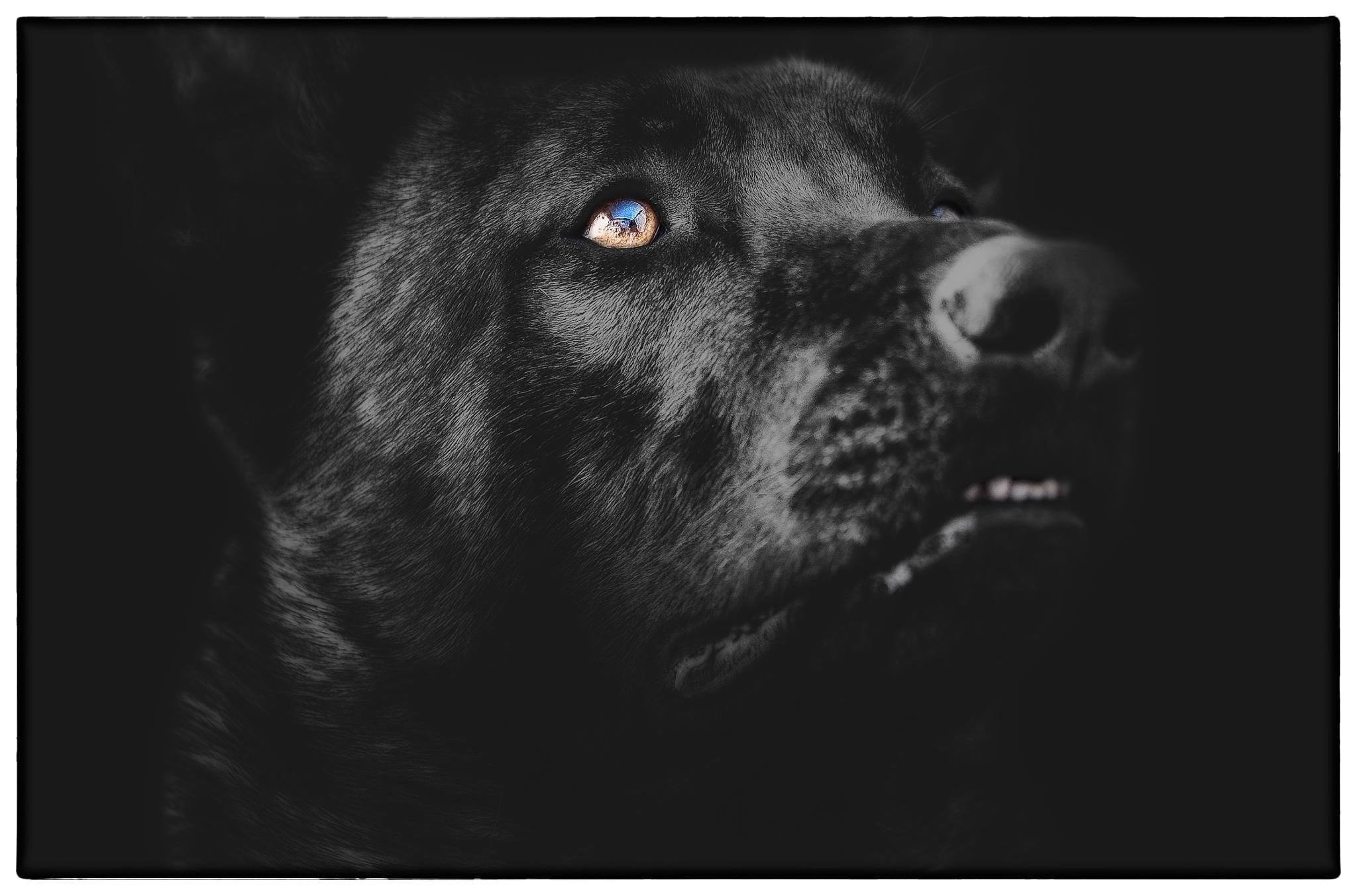Photo in Animal #malinois #nikon #d700 #tierfotografie #peter kaul