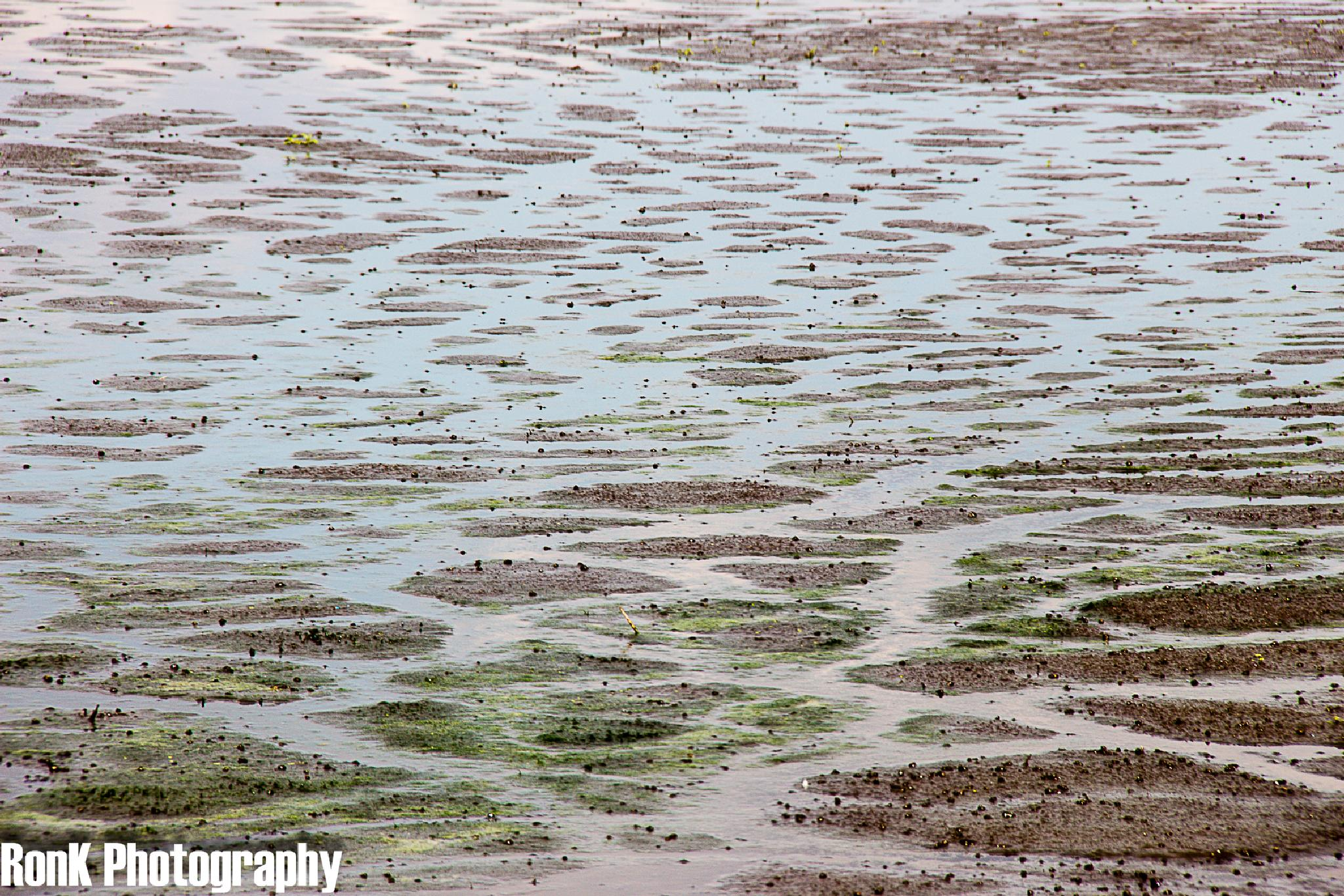 Photo in Landscape #swamp #detail #waverhoek #netherlands