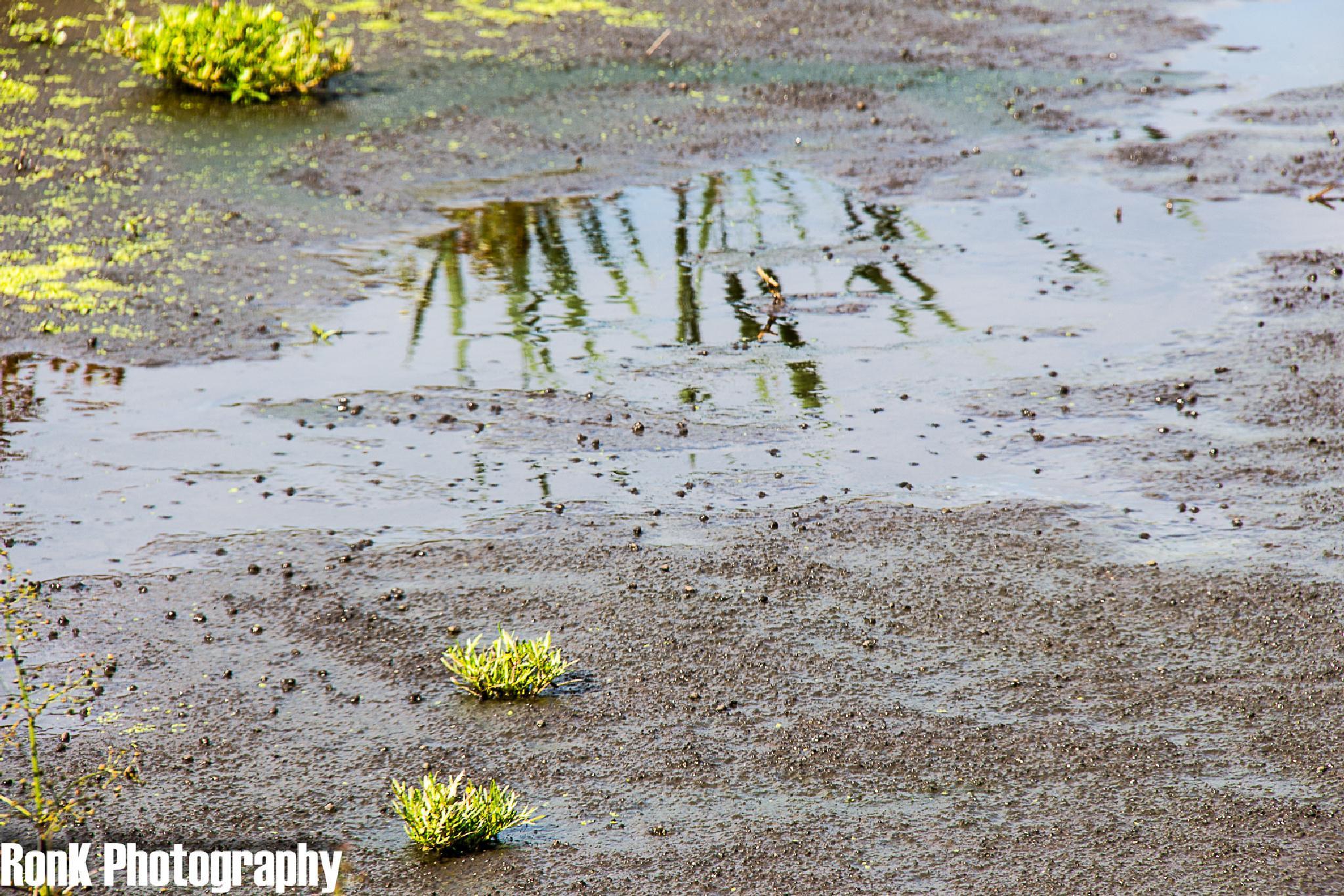 Photo in Landscape #swamp #waverhoek #detail #netherlands