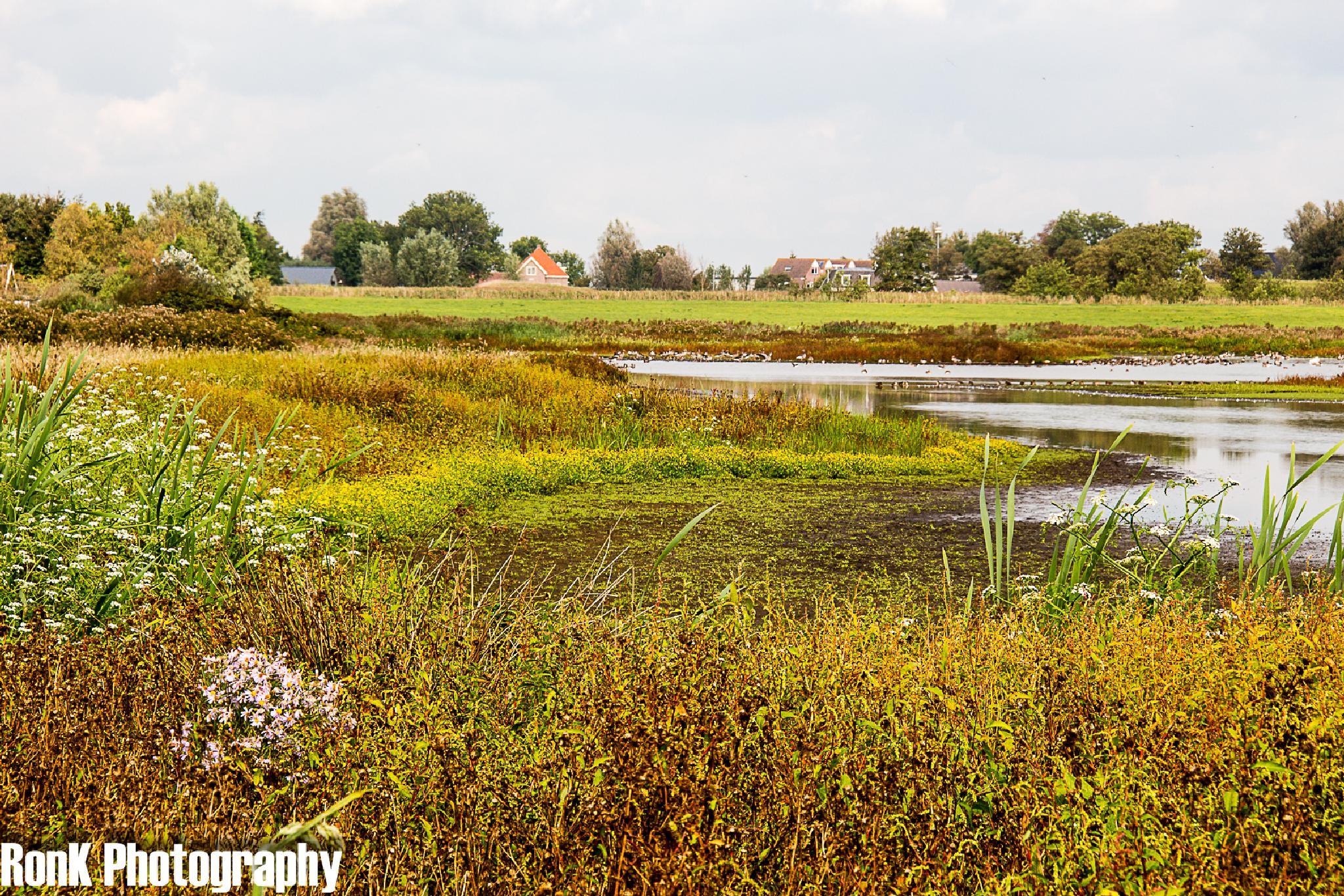 Photo in Random #landscape #waverhoek #netherlands