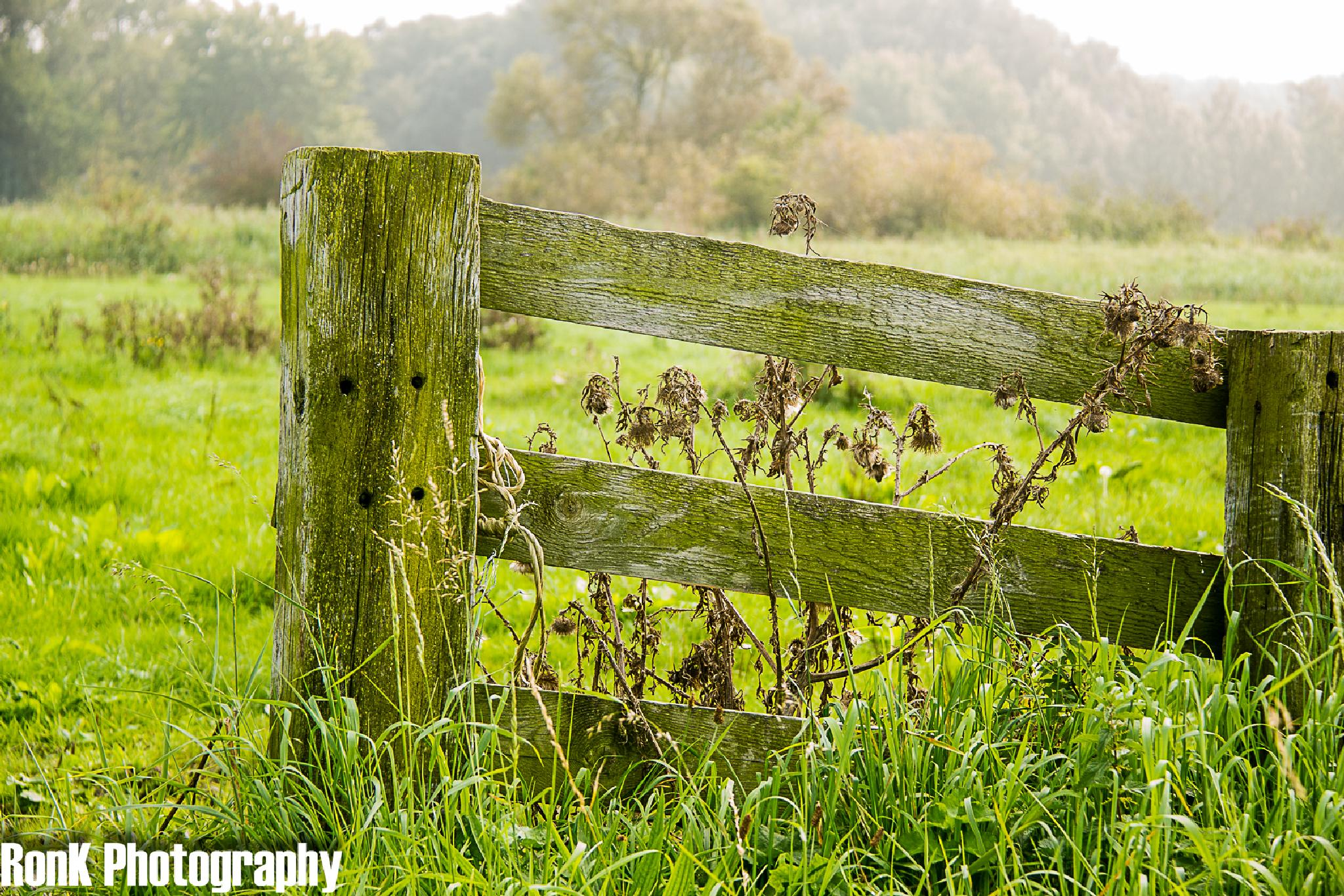 Fence by ron.koster23
