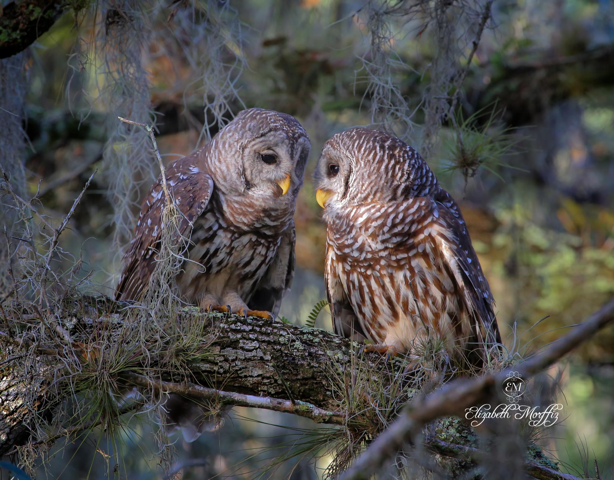"""""""Love is in the air"""" #3 by Liza Morffiz"""