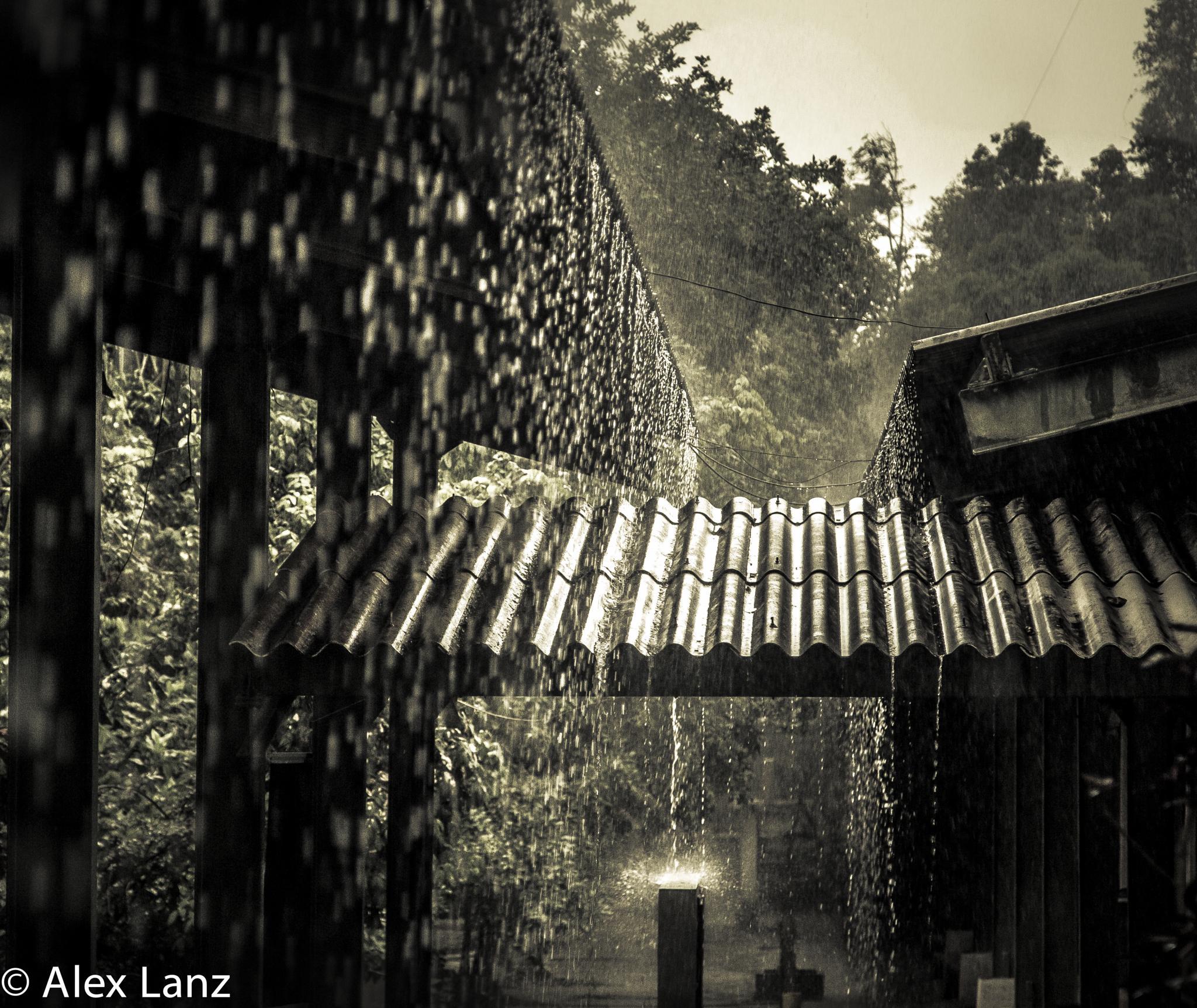 Photo in Travel #forest #amazonas #brasil #manaus