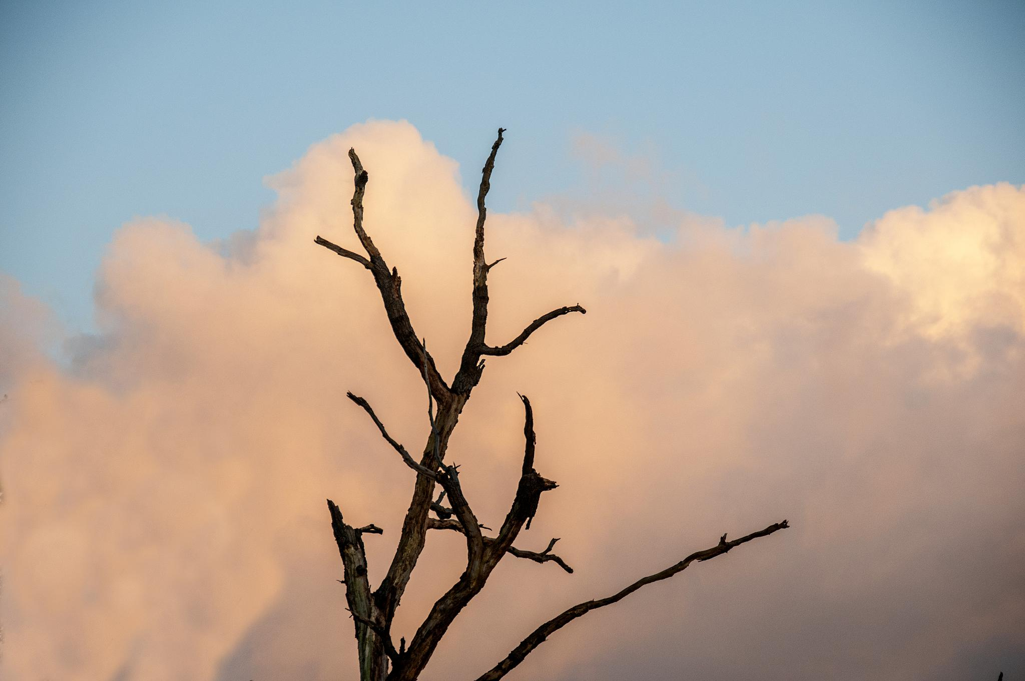 Lonesome Pine by cakey.white