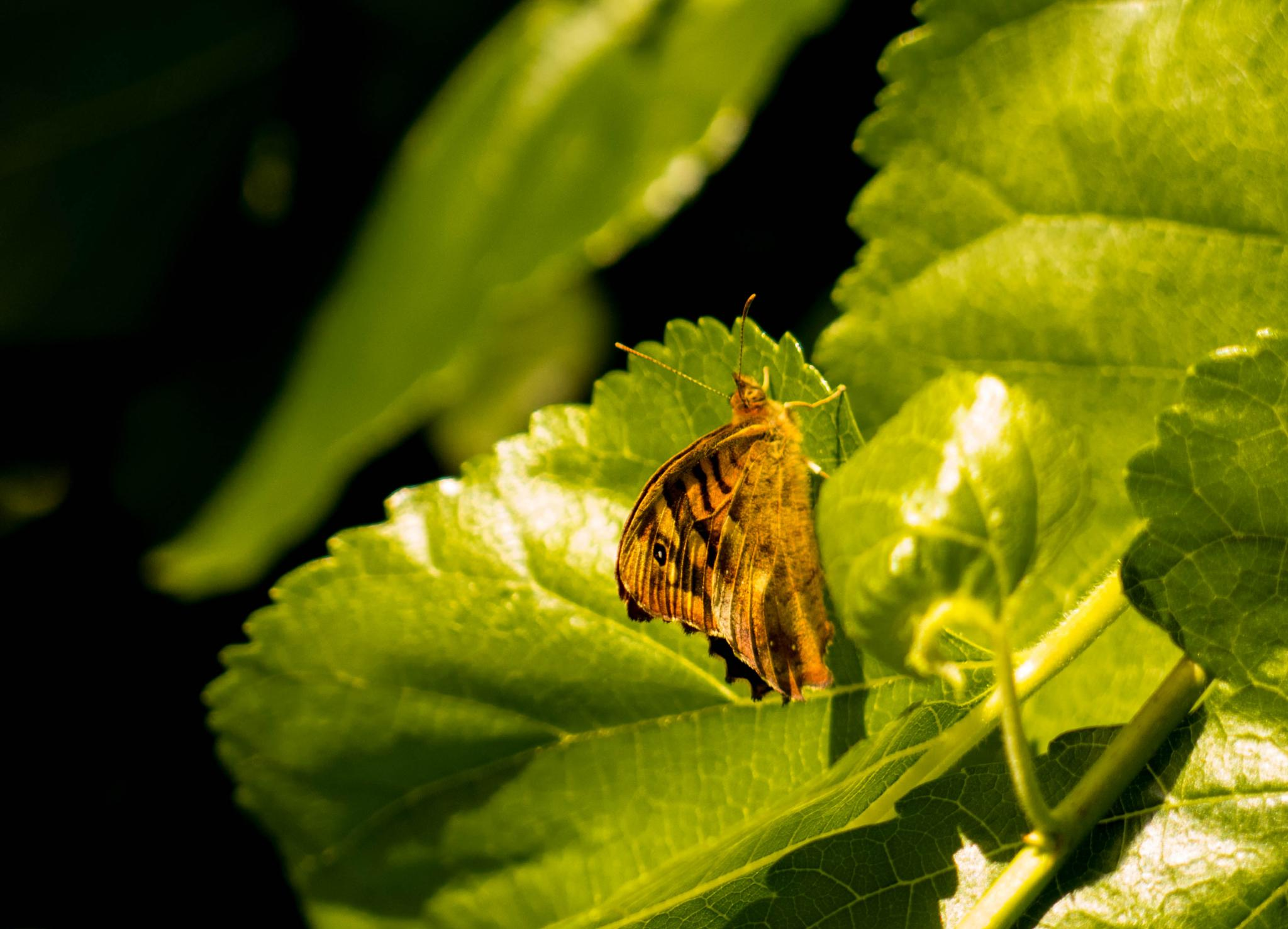 Photo in Nature #butterfly #nature #summer #leafs #green