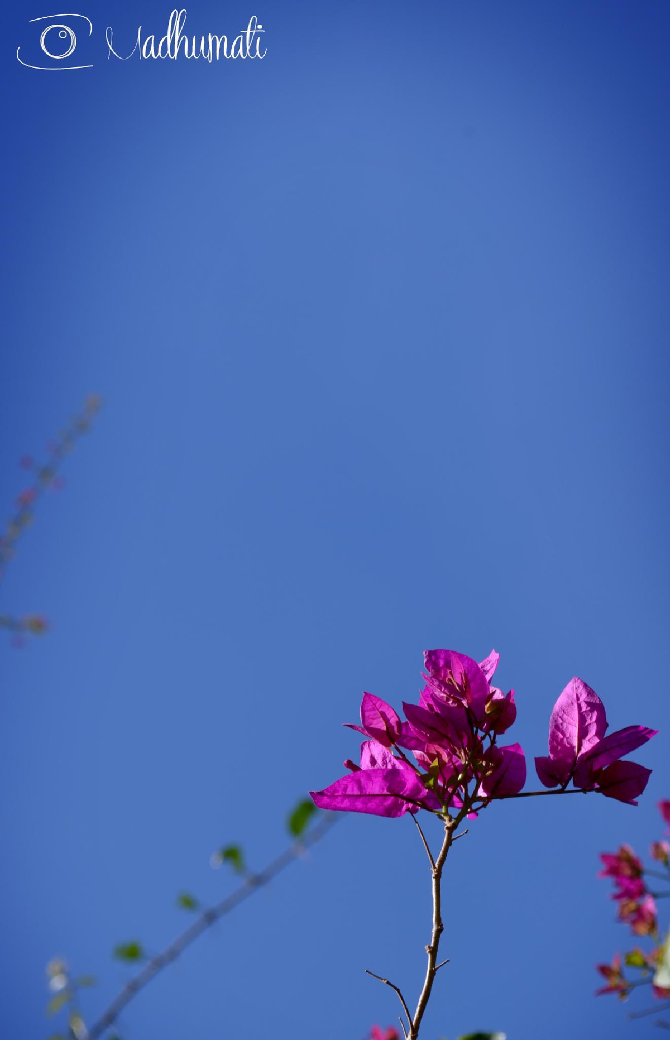 Primavera by madhumati