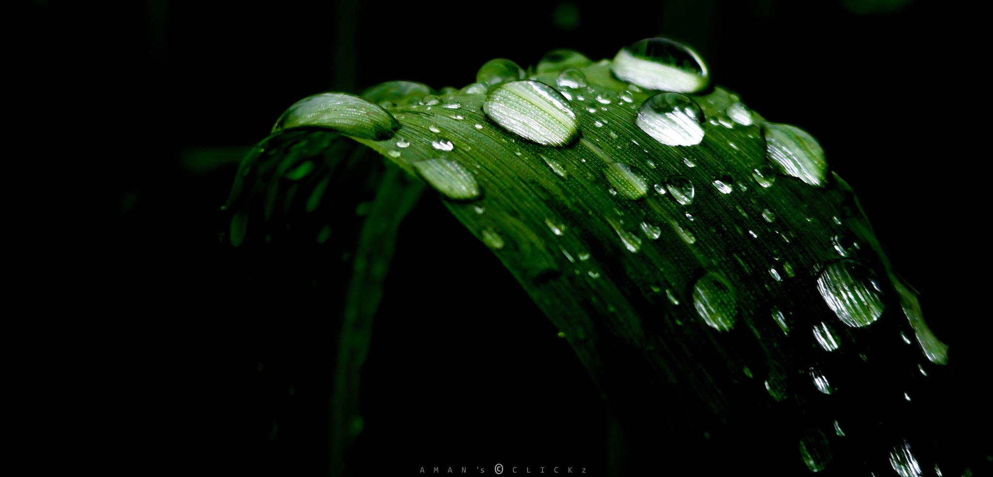 Droplets  by Shahriar Aman
