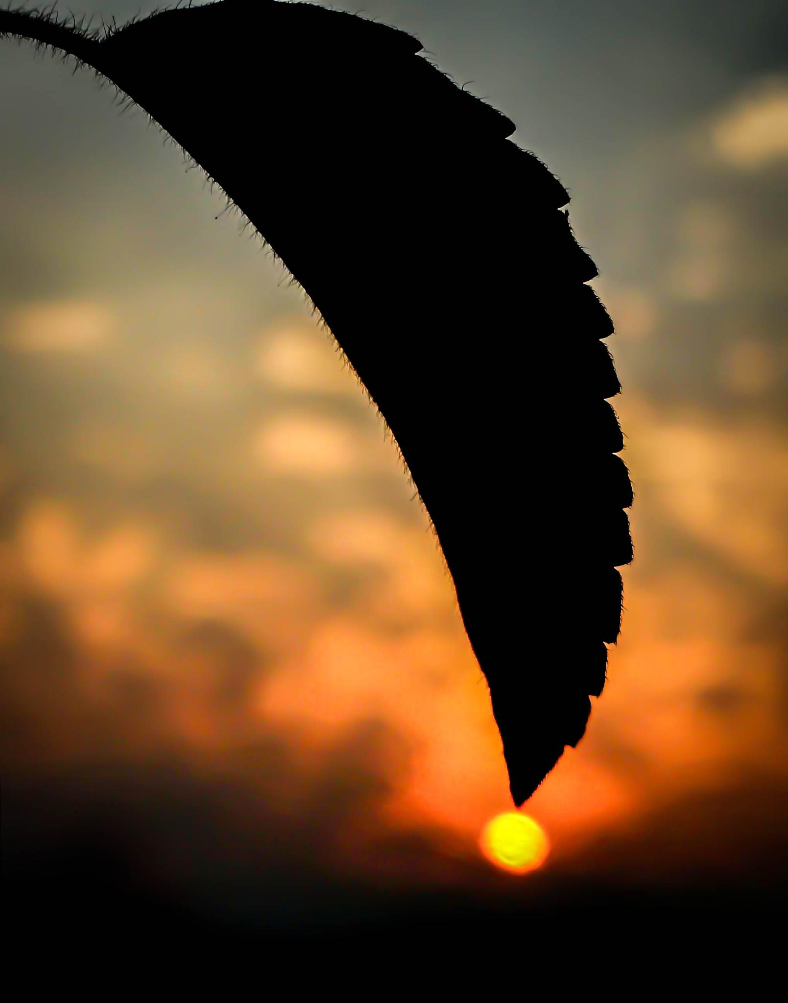 Photo in Nature #silhouette #sunset #sundrop