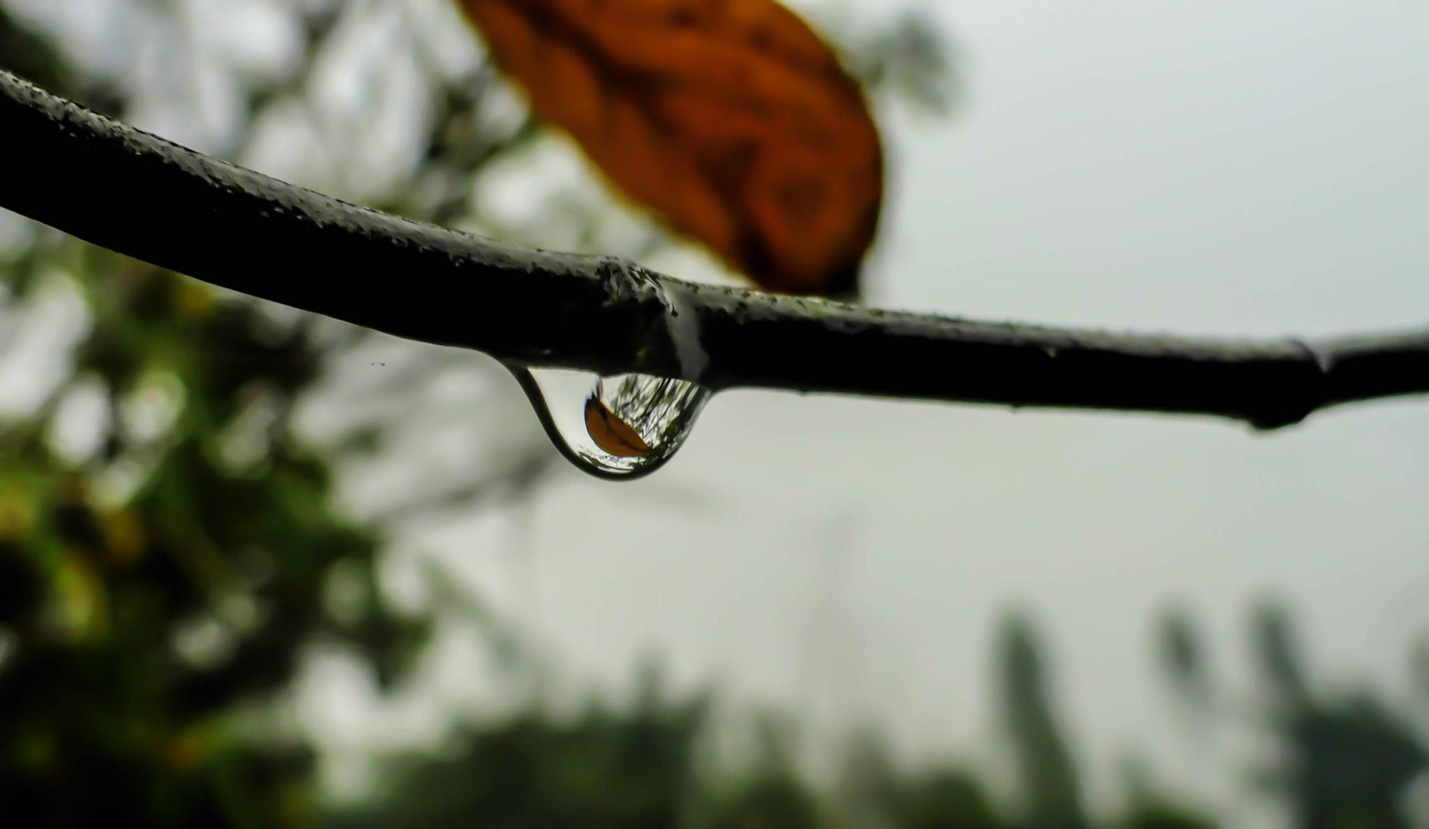 Photo in Macro #macro #droplet #rain #leaf #nature