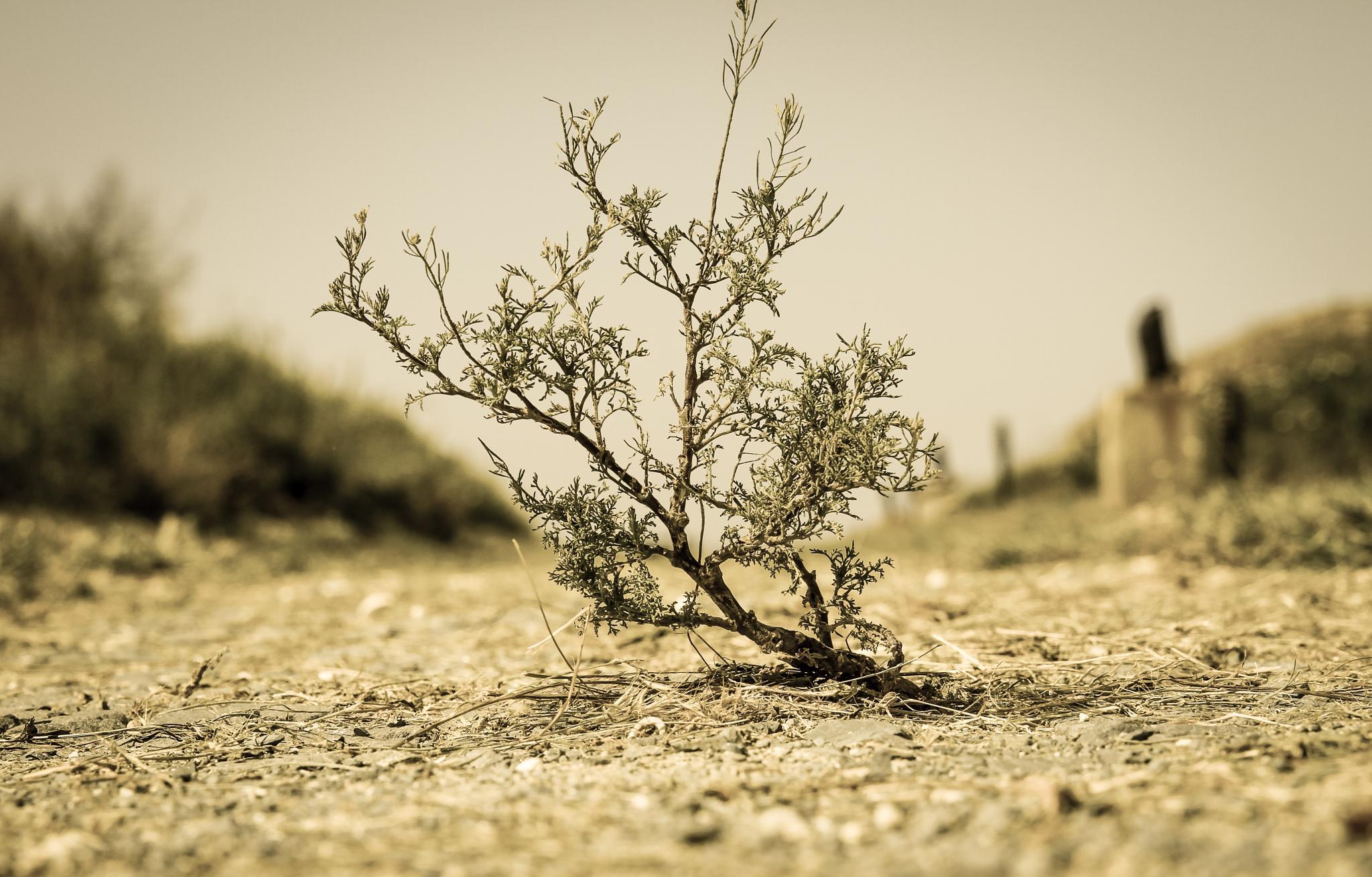 Little tree by MonicaDurbac