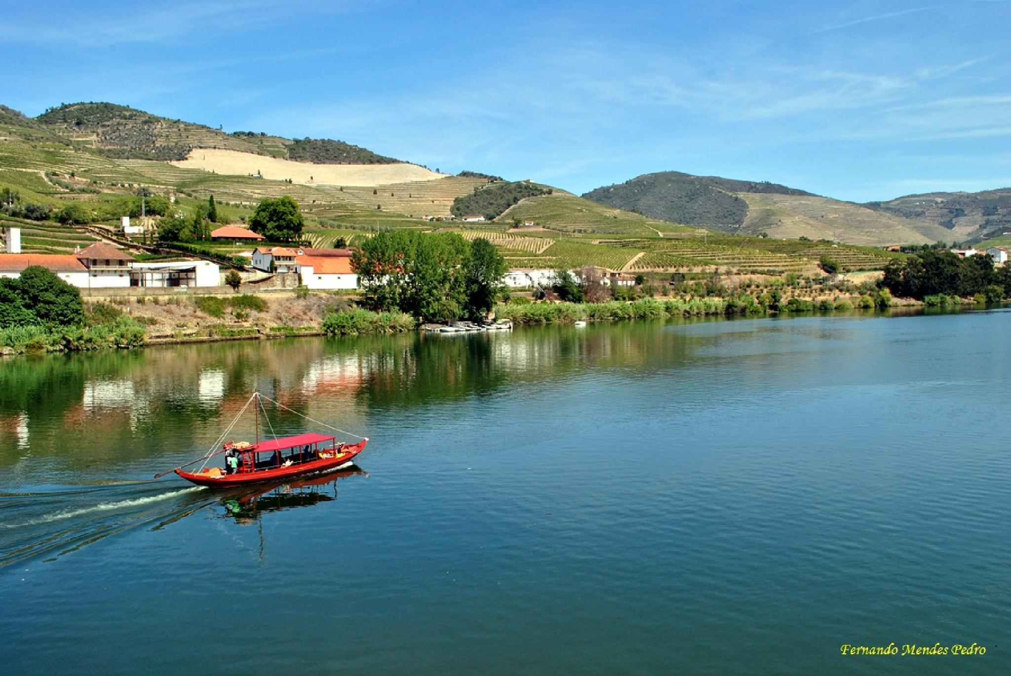 Photo in Landscape #vineyards #river #landscape