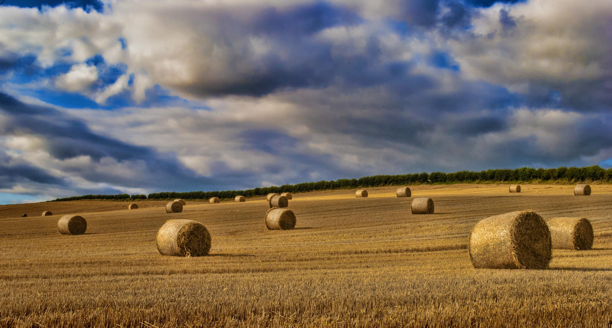 Hay Bails by Bobby White