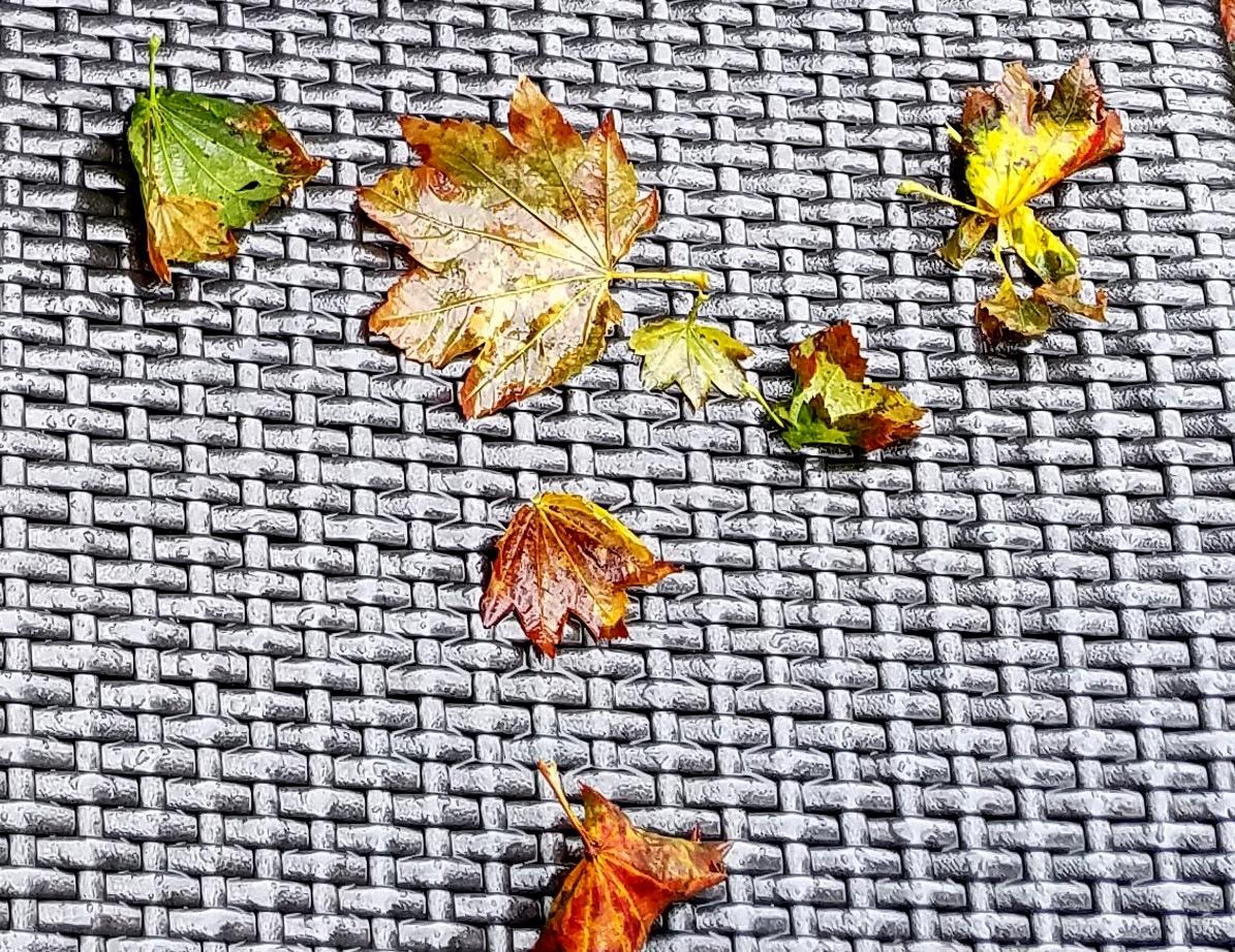 Autumn  by mpross1