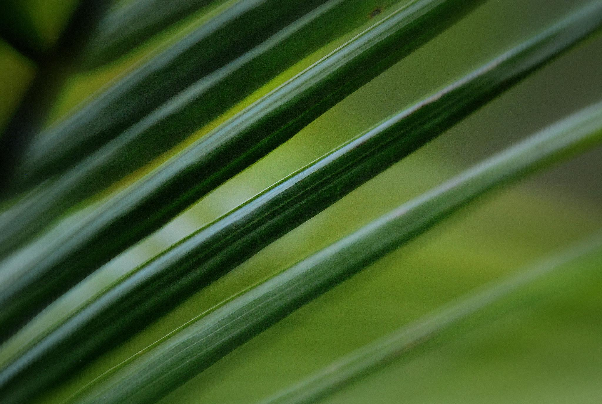 Shades of Green by mpross1